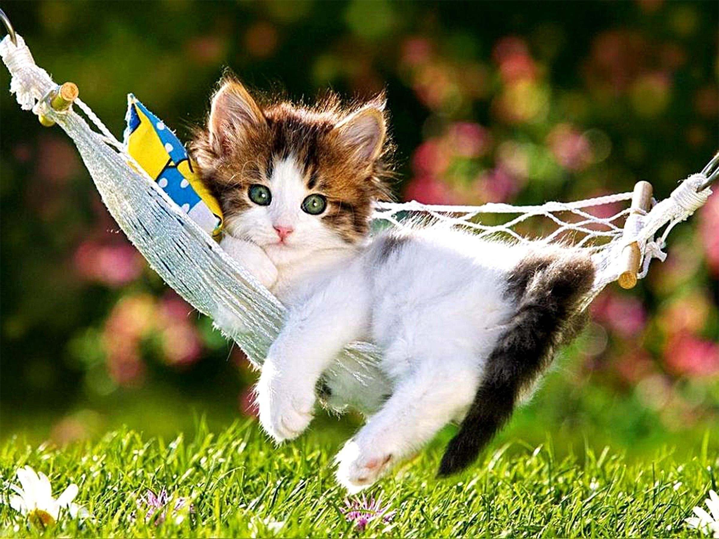 Funny And Cute Cat Pictures 21 Background: Cute Kitten Desktop Wallpaper (60+ Images