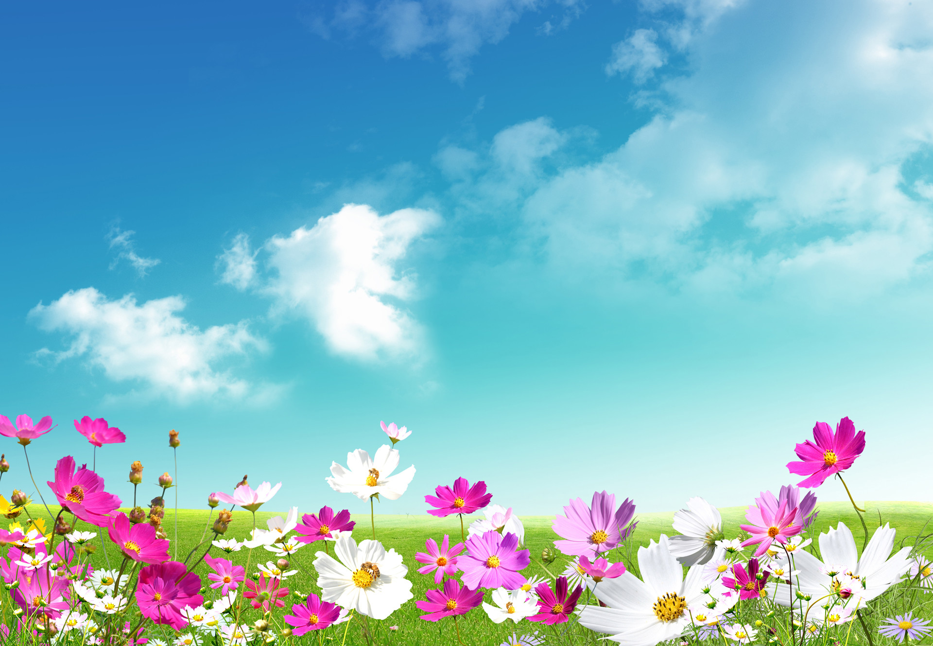Early Spring Flowers Wallpapers For Desktop Flowers Healthy