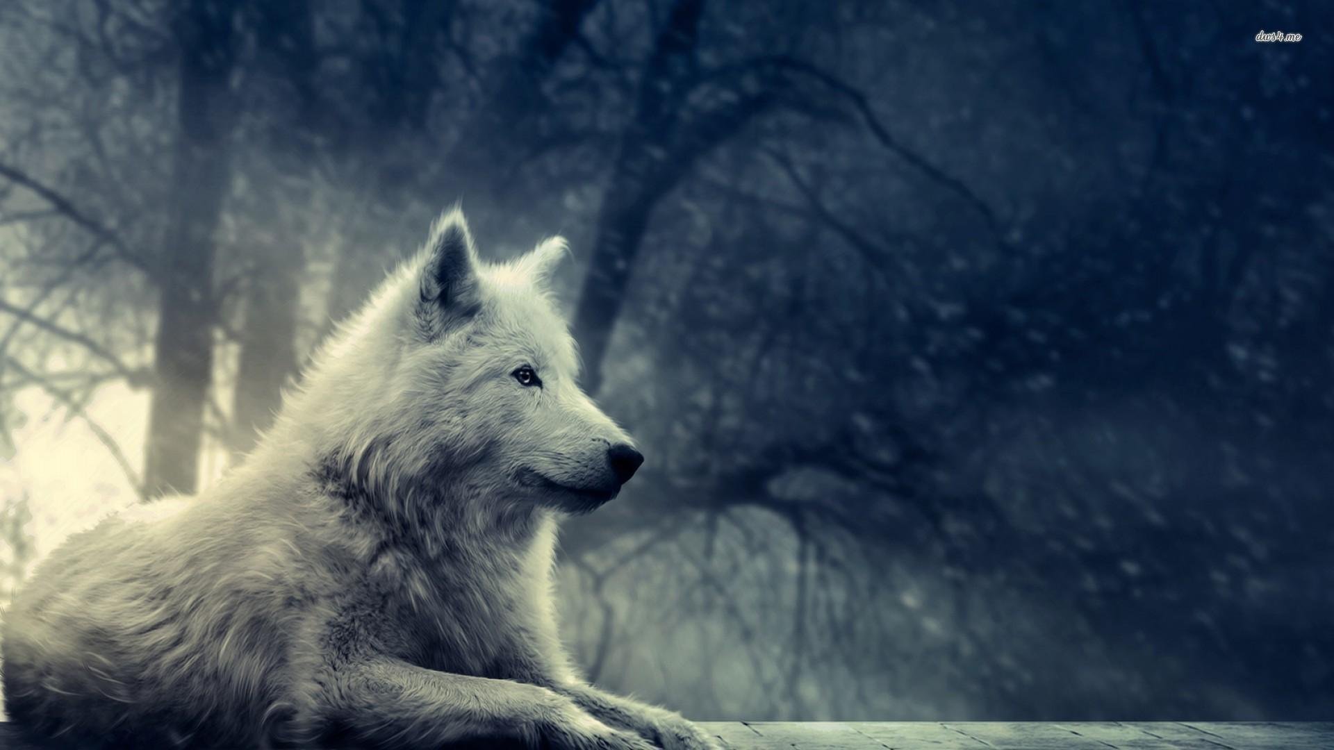Animal Jam Arctic Wolf Wallpaper (70+ images)