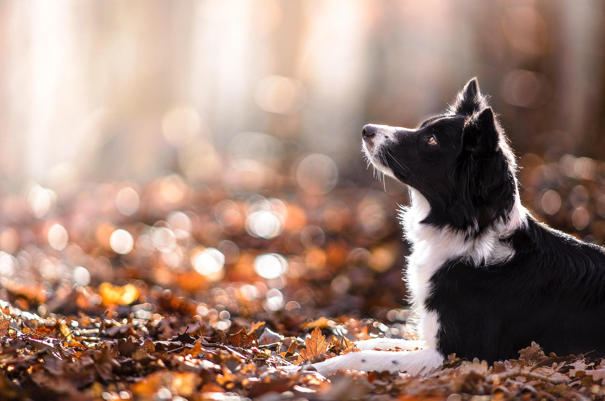 Animals Dog Filter Wallpapers Hd Desktop And Mobile: Animal Fall Wallpaper (60+ Images
