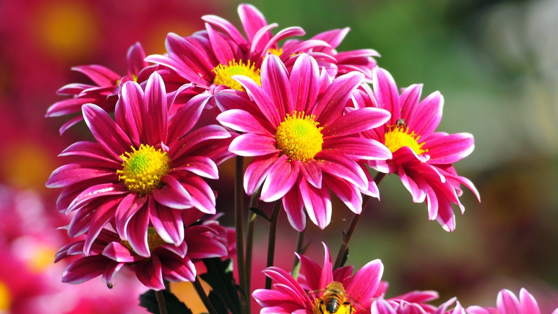 Beautiful Flowers Wallpaper 60 Images