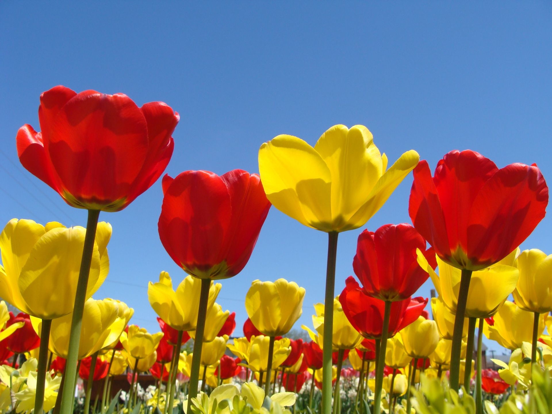 1920x1440 Spring Flowers Background | Spring Flowers Wallpapers in Red, Yellow for  Desktop Backgrounds