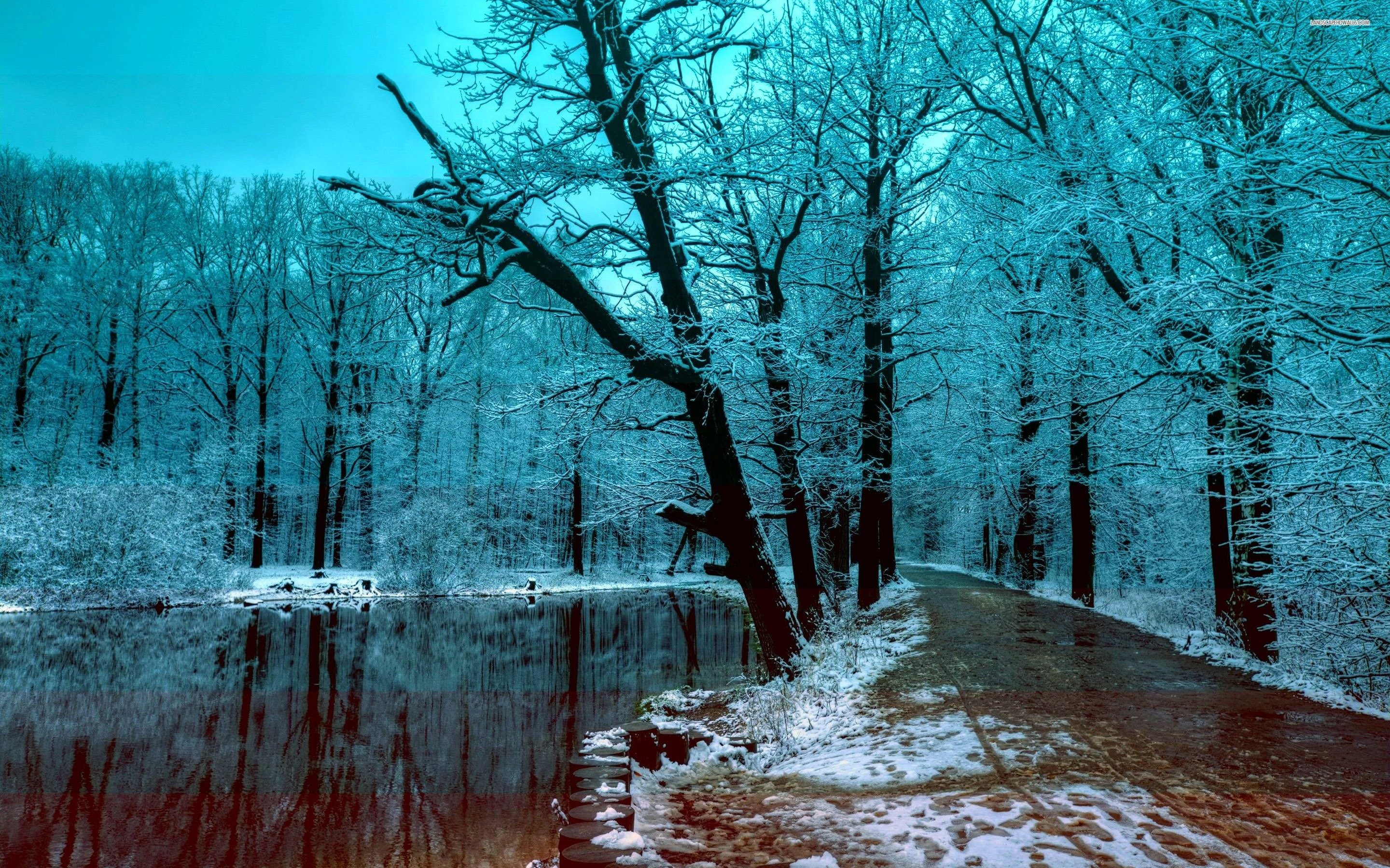 Forest 4k Quality Iphone Wallpaper: Beautiful Winter Wallpapers (60+ Images