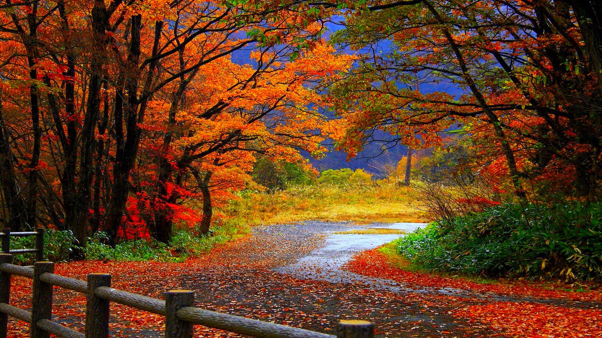 2560x1440 Fall Wallpaper High Definition