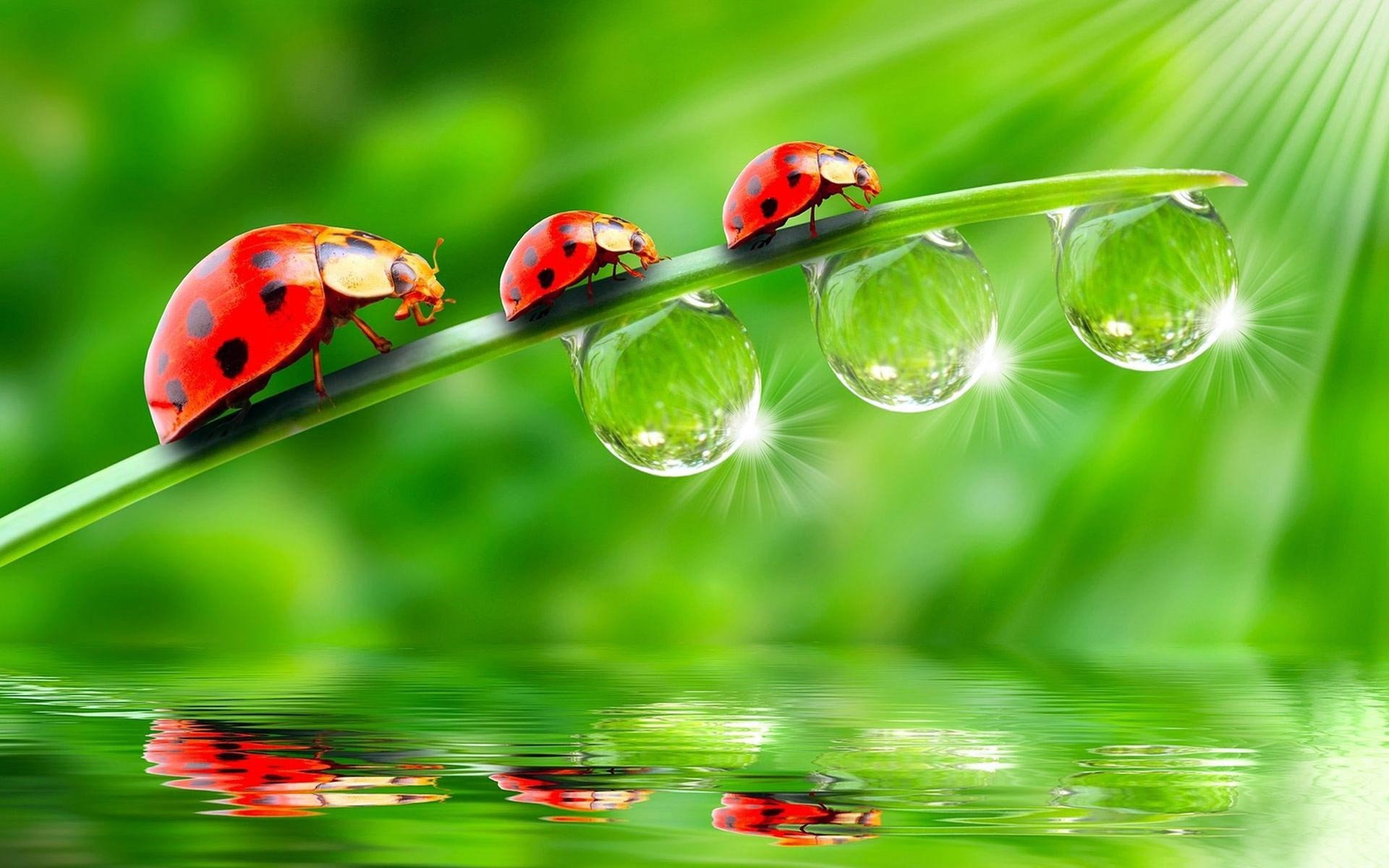 1920x1200 Cute Ladybug Wallpaper High Quality Resolution for Background