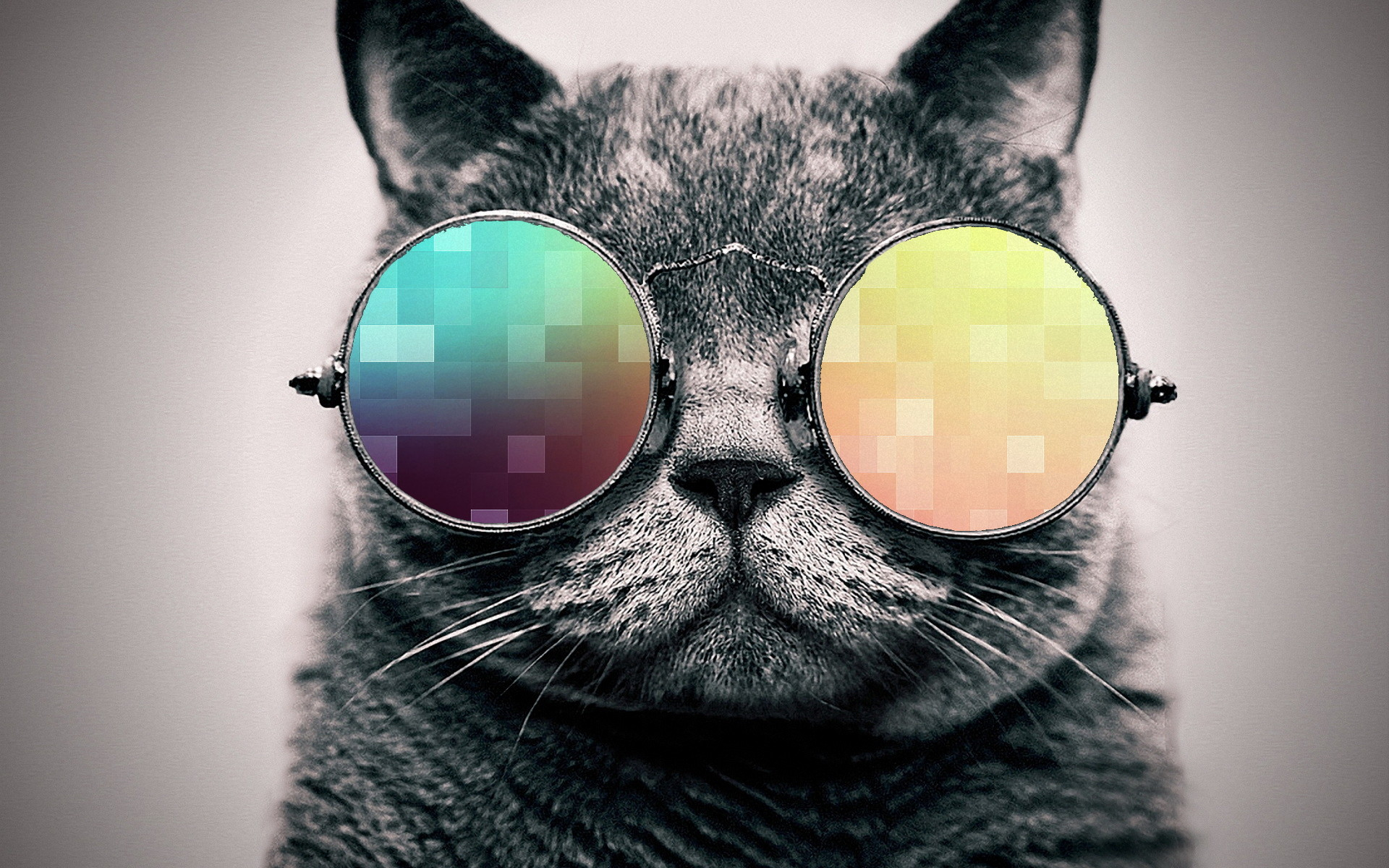 Cool Cat Wallpaper