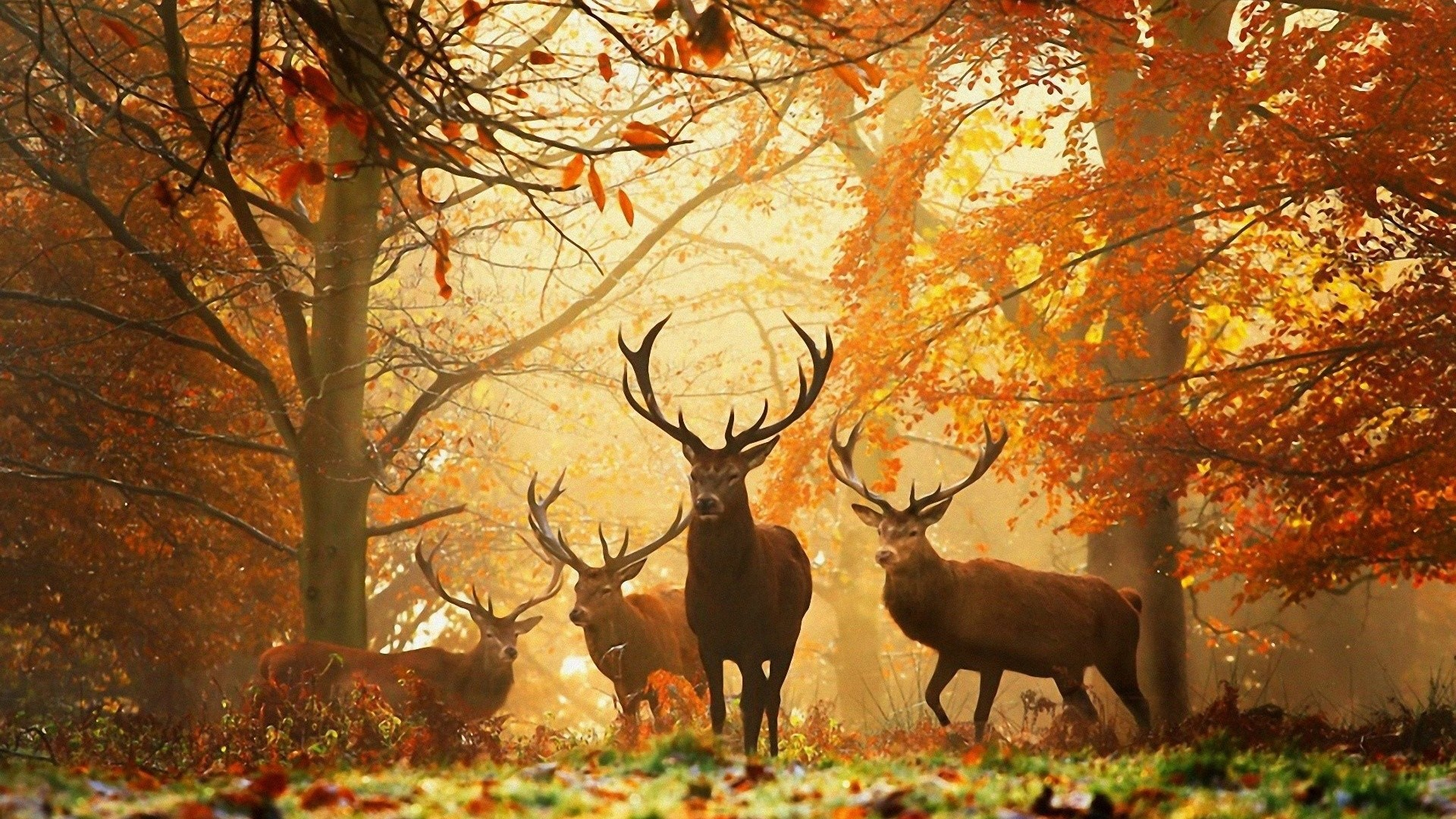 1920x1080 Preview wallpaper deer, forest, leaves, autumn, grass, rays, sun