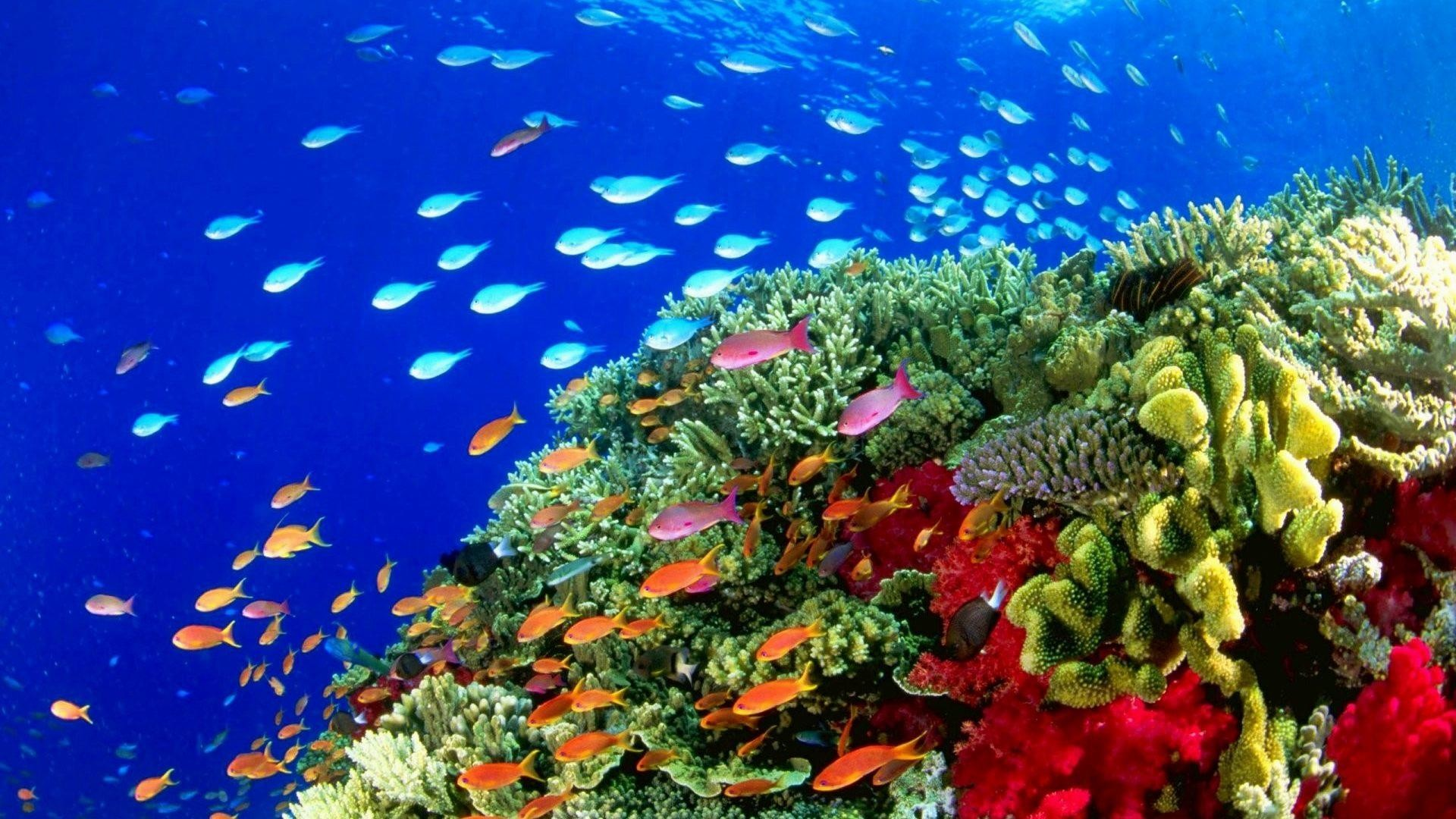 Coral Reef Live Wallpaper (59+ images)  Coral Reef Wallpaper 1920x1080