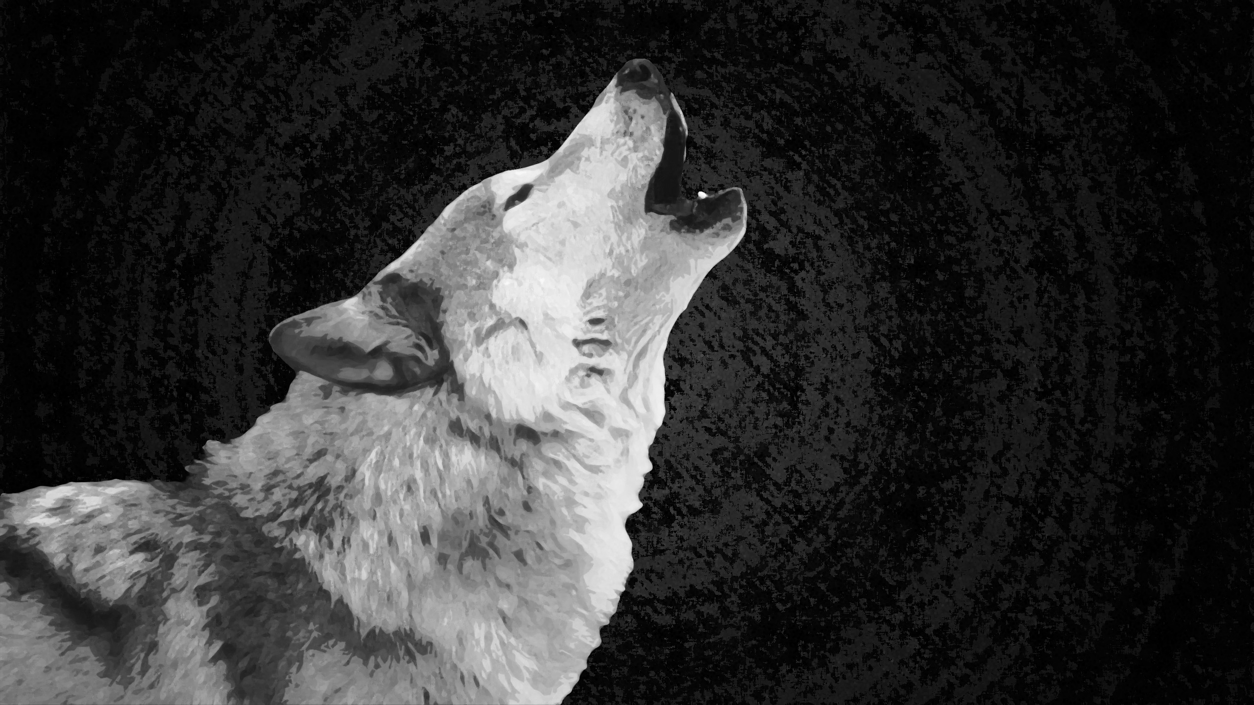 2560x1440 White Wolf wallpaper high definition