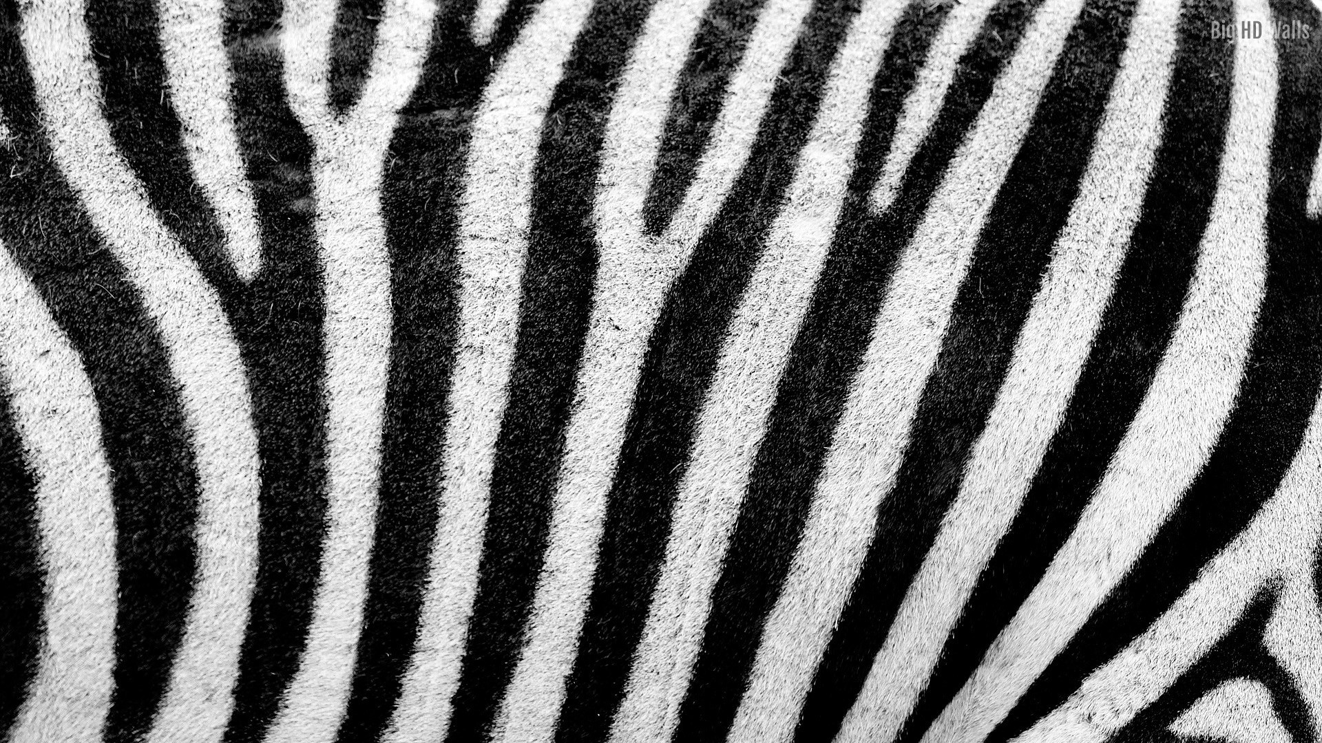 1920x1080  Black And White Striped Computer Wallpaper 10 Texture Backgrounds  To  · Stripe Wooden Texture For .