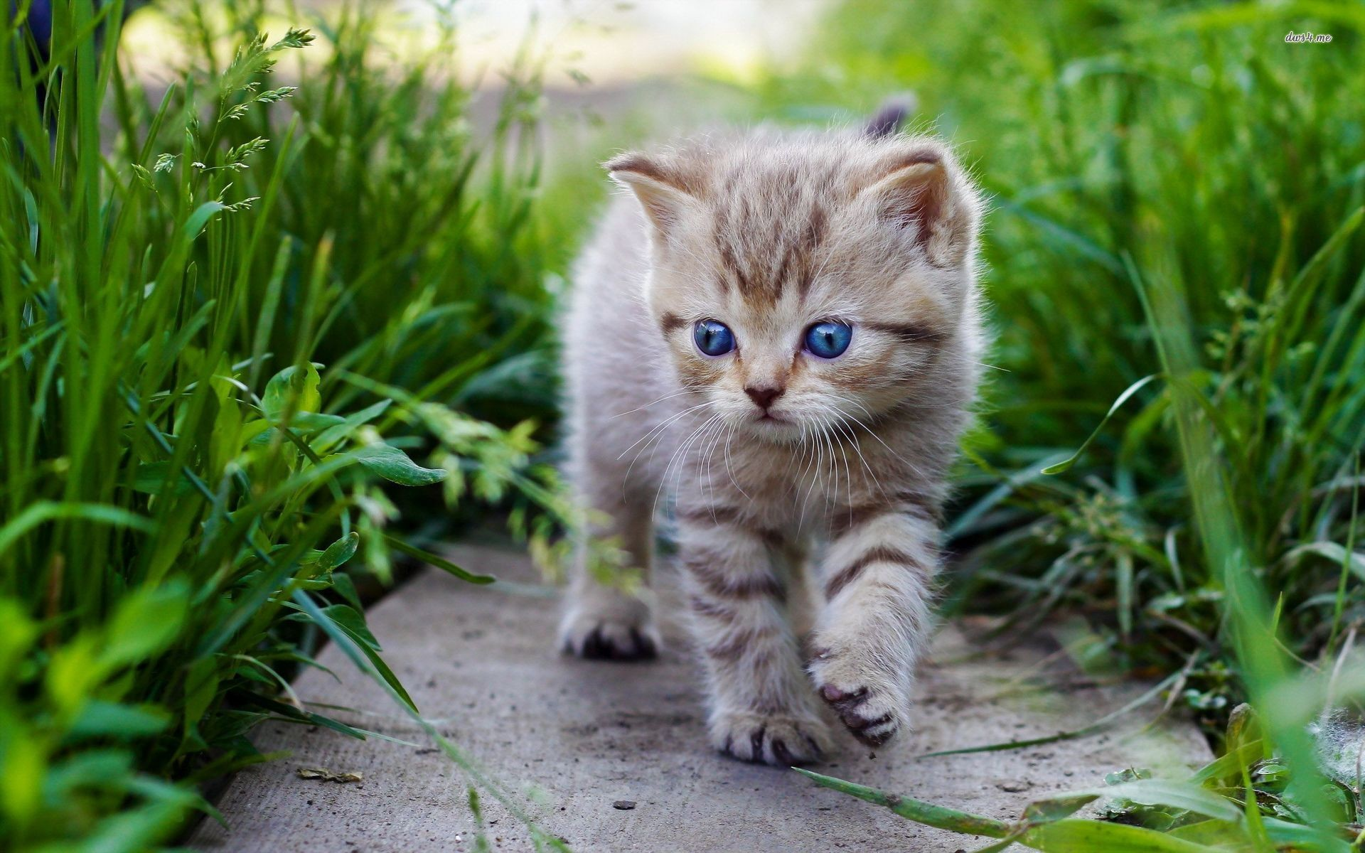 1920x1200 ... cute-baby-cats-wallpaper-1.jpg ...