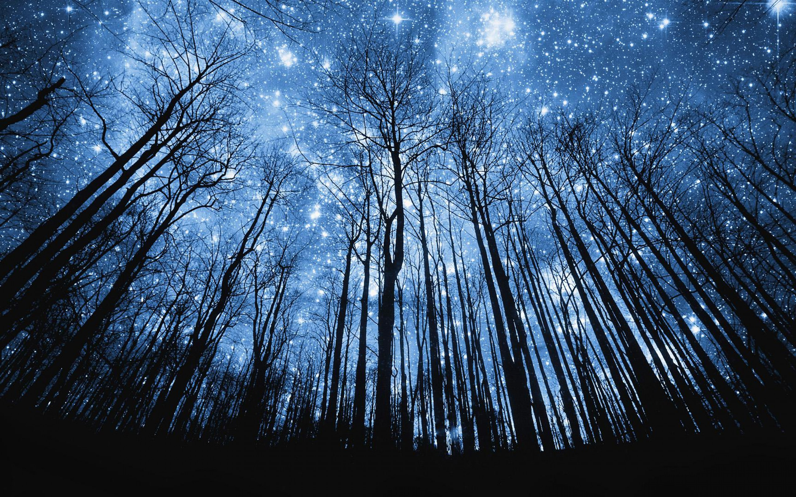2560x1600 'photo-manipulation-starry-night-in-forest-wallpaper'
