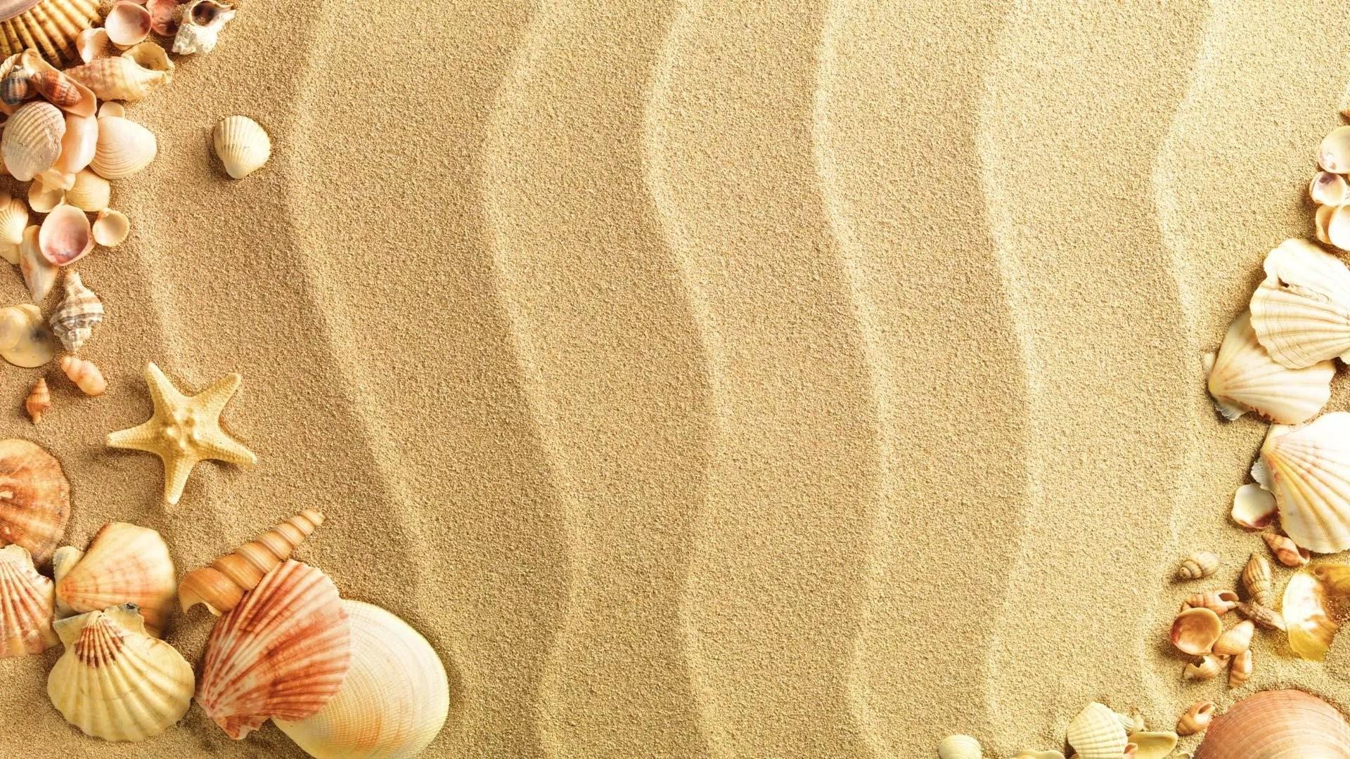 Seashell Backgrounds (43+ Images