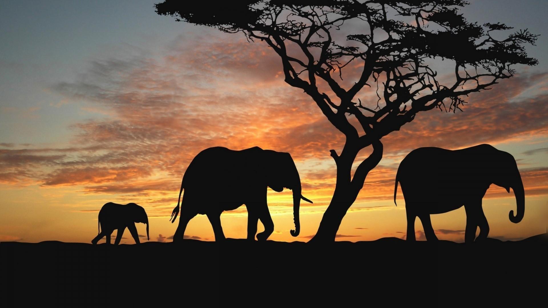 Baby elephants wallpaper - photo#42