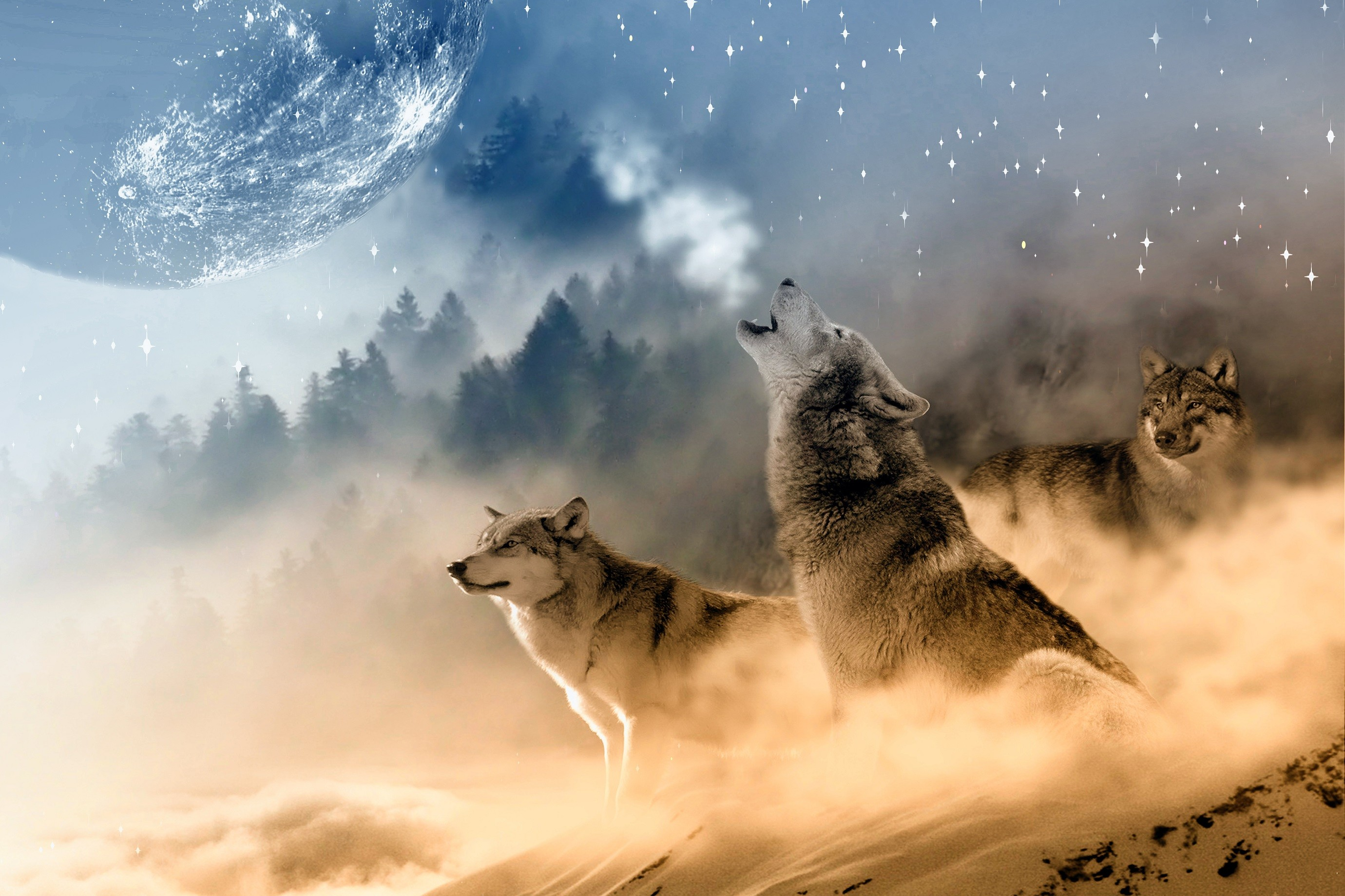 1920x1080 HD Wolf Wallpapers P 1920Af 1200 Desktop 40