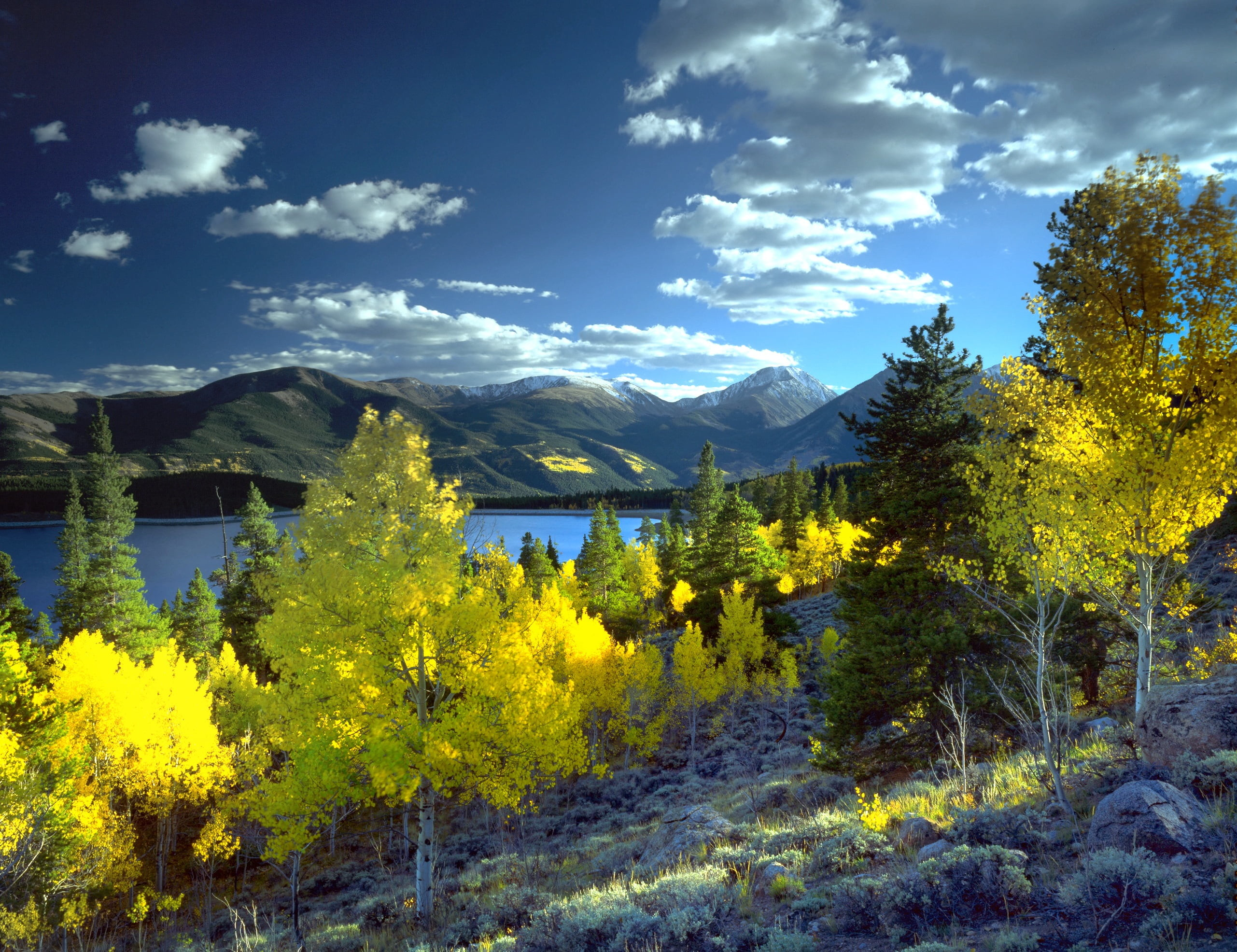2562x1972 photography of yellow trees near body of water during daytime HD wallpaper