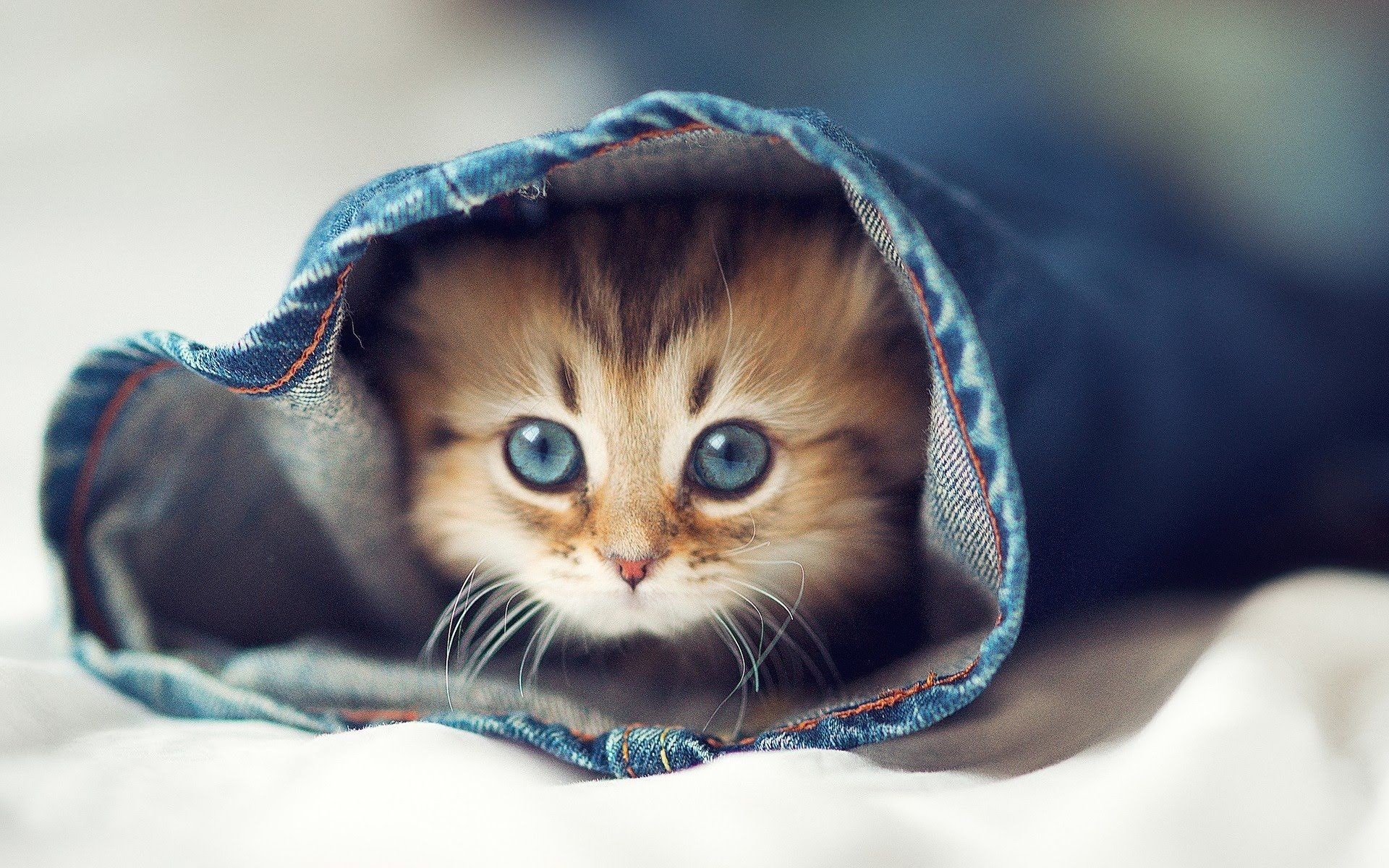 1920x1200 HQFX Cute Kitten Wallpapers, High Quality, Wallpapers and Pictures –  download free