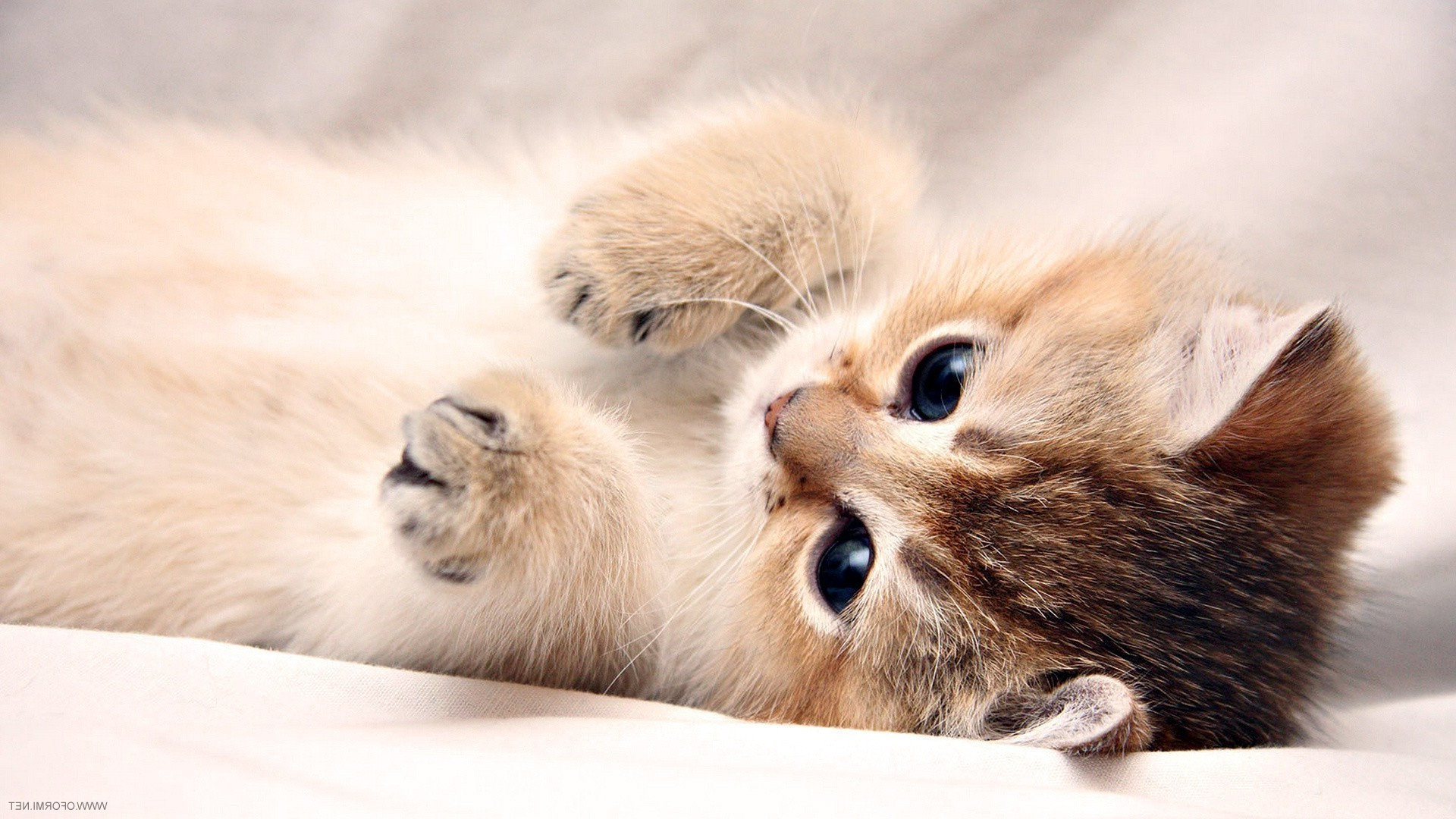 Cute Kitten Background 59 images