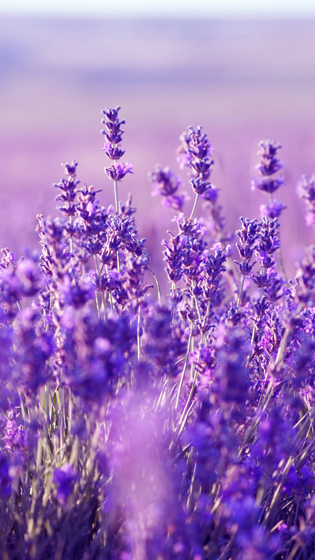 1080x1920 Beautiful Lavender Wallpaper: HD Lavender Mobile Background -  http://helpyourselfimages.com