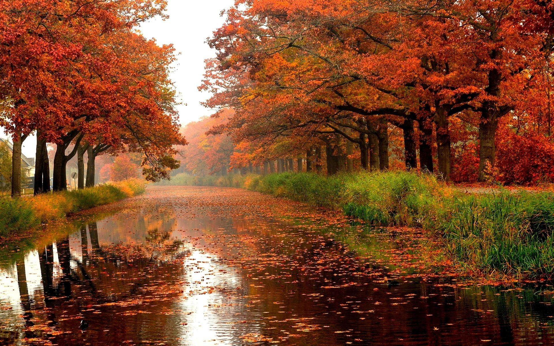 Rainy Fall Wallpaper (78+ images)