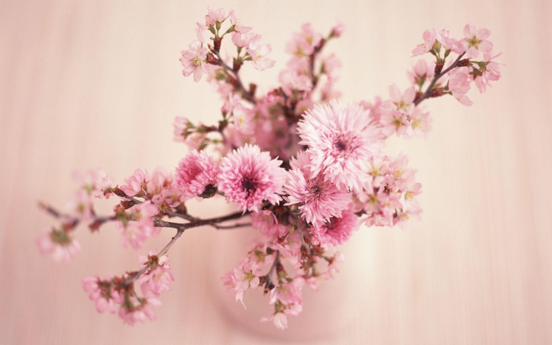 1080x1920 Flower Iphone Wallpaper