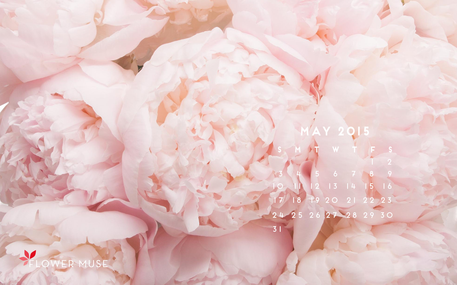 1920x1200 Behind the Scenes at a Peony Farm May 2015 Calendar