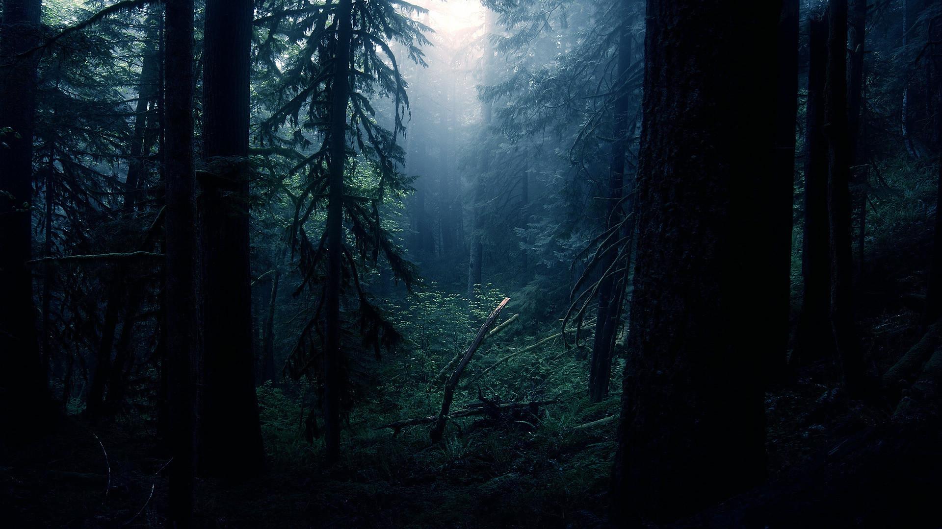 1920x1080 Dark Forest Wallpapers Wallpaper 1920Af 1080 Creepy Backgrounds 35