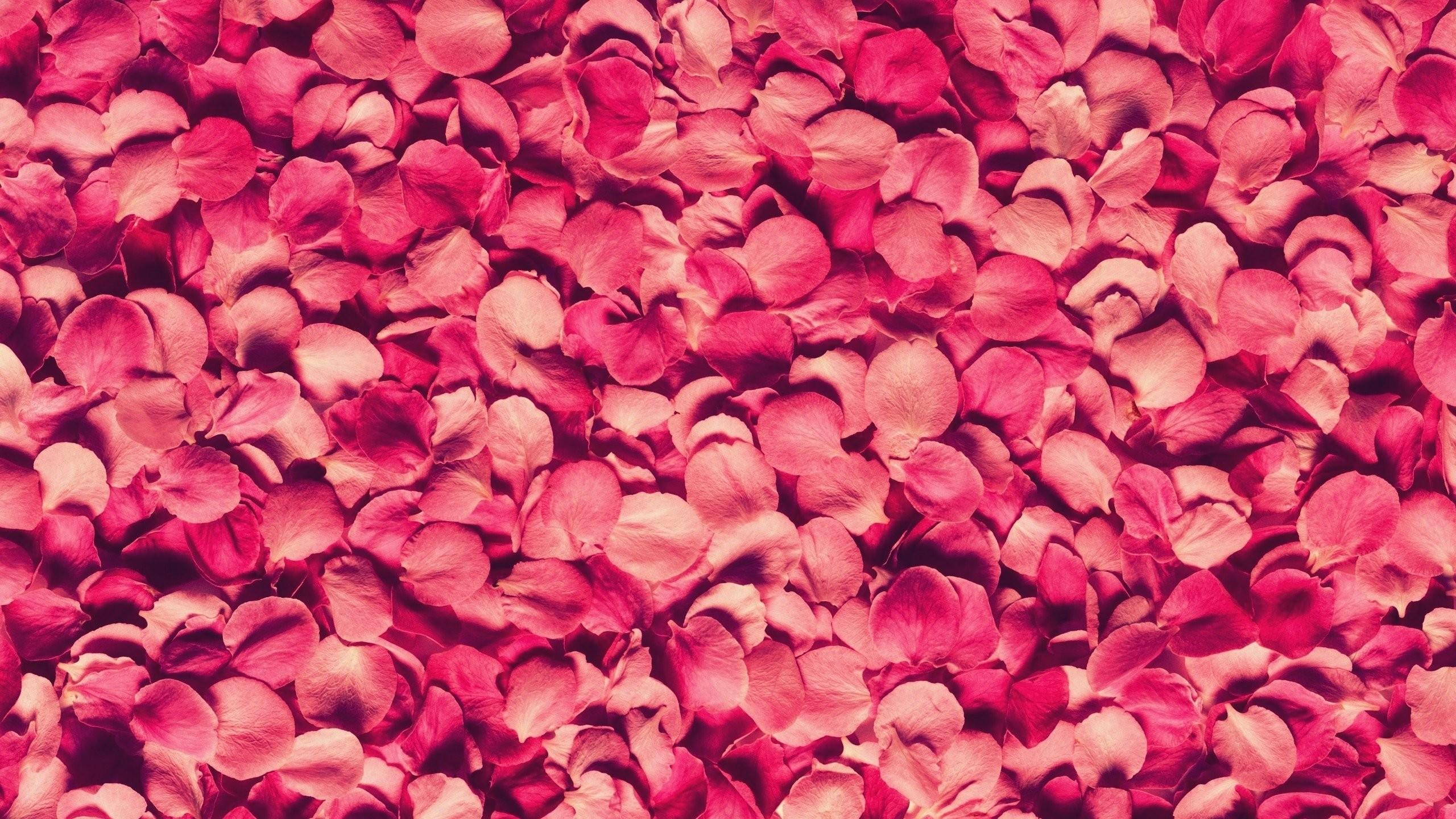Ipad Wallpaper Little Plant In A Bubble: Pink Bubbles Wallpaper (71+ Images