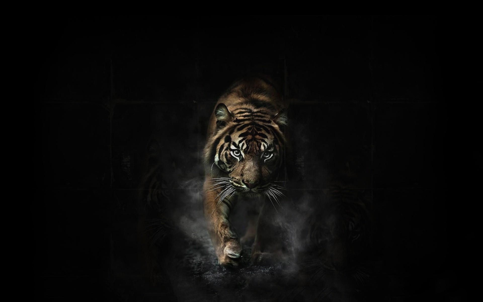 1920x1080 4 Tiger Iphone Wallpaper4 1 600x338