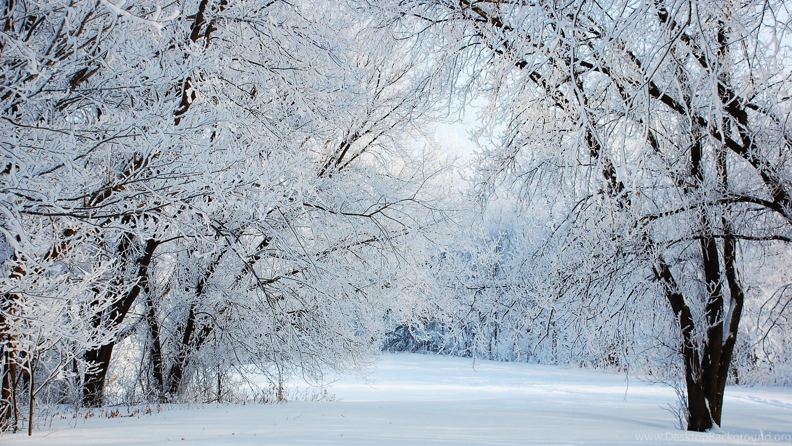 Winter wonderland desktop background 54 images for Desktop gratis inverno