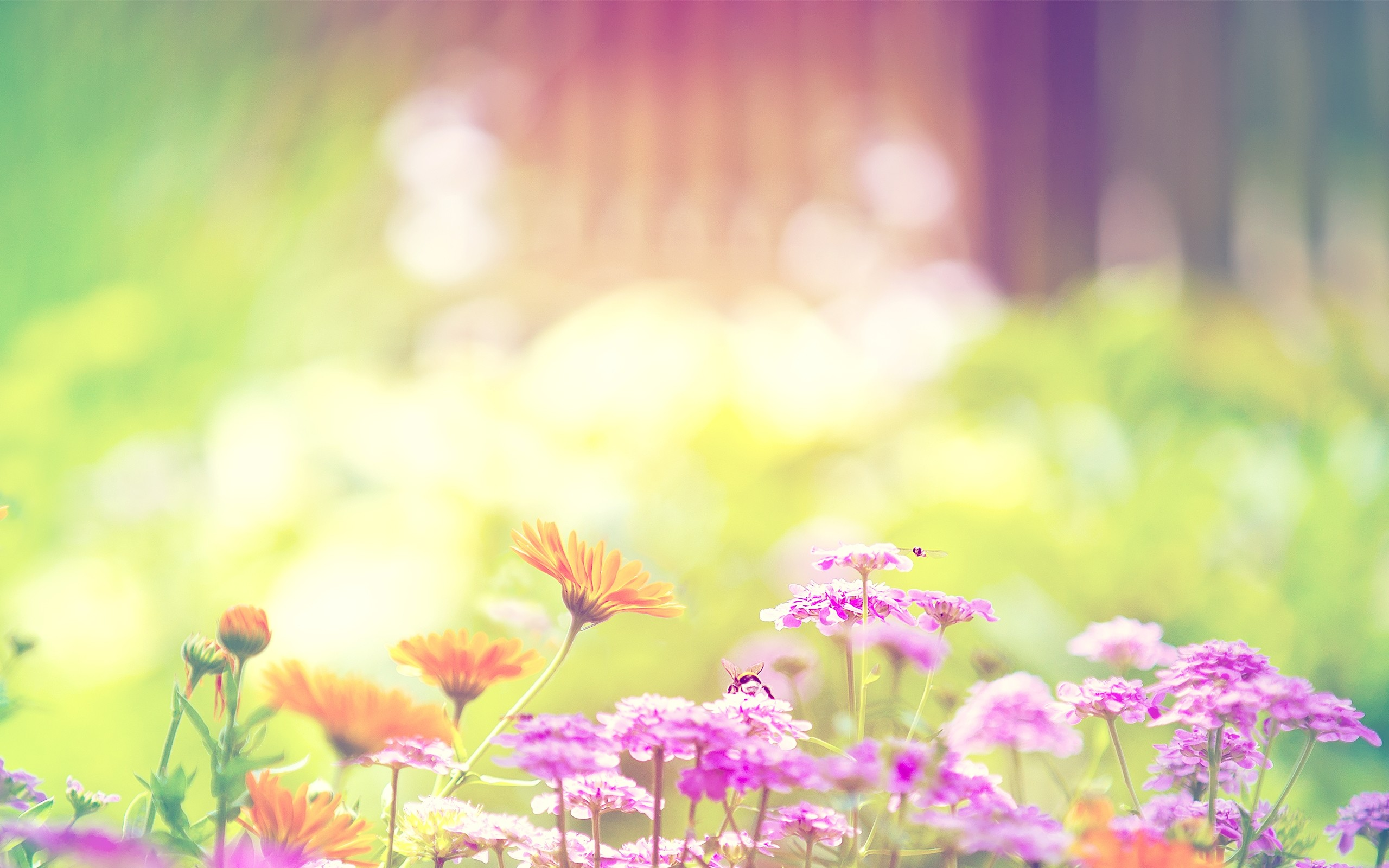 2560x1600 Spring Flowers Background