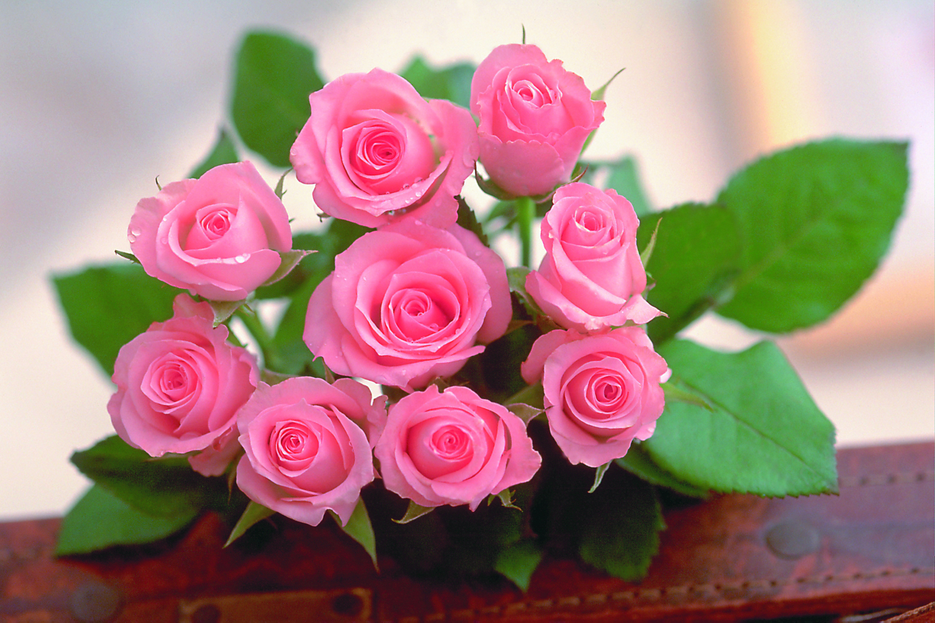 Beautiful rose flowers wallpapers 52 images 1920x1200 beautiful rose flowers wallpaper izmirmasajfo Image collections