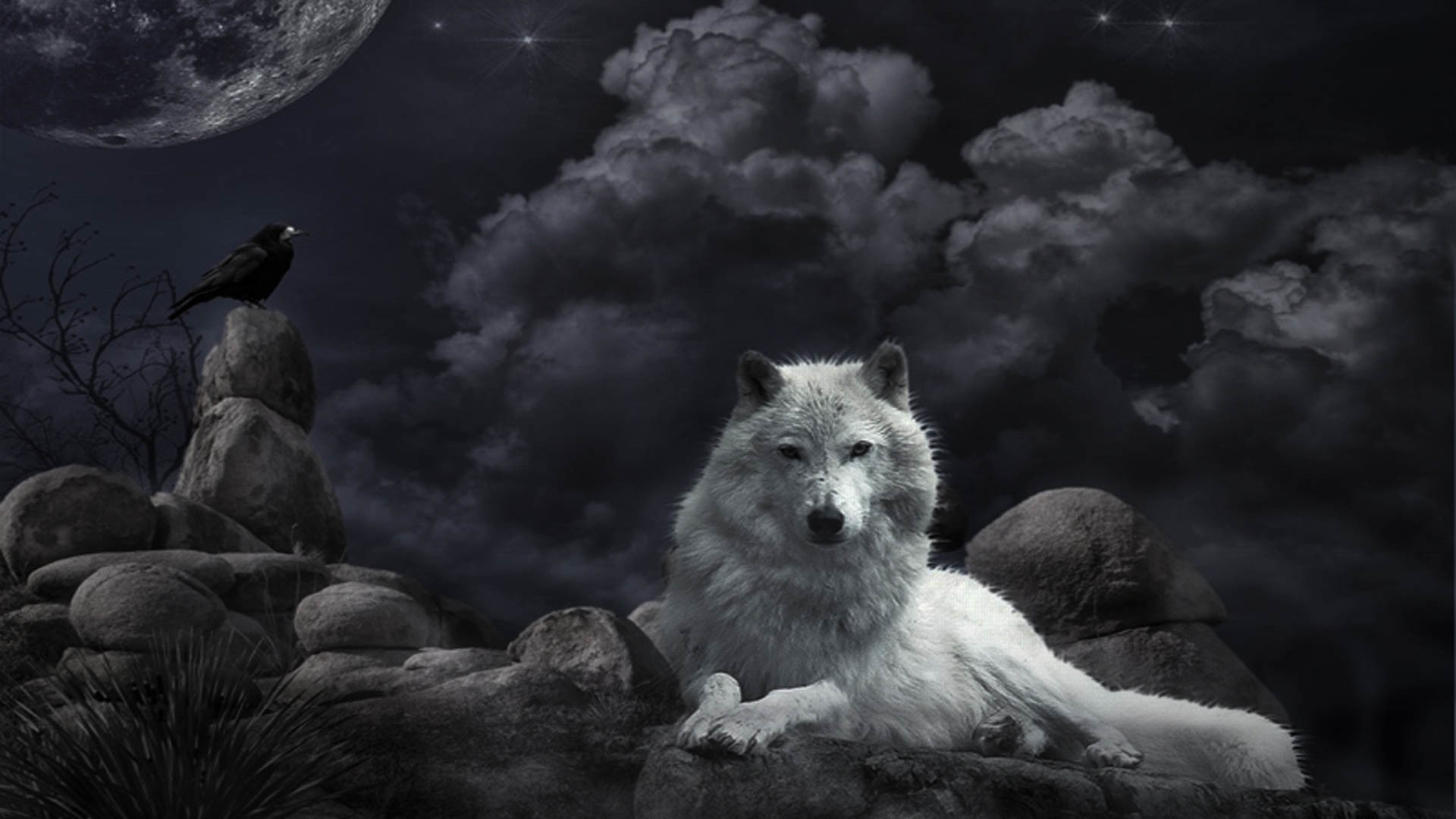 1920x1080 Wolf Awesome HD Wallpapers Pictures (High Quality) ...