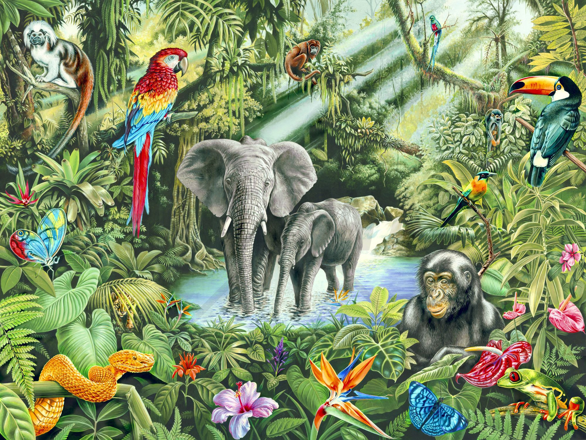 2000x1500 Animal Mural Wallpaper Incredible Jungle Wall Mural & Wallpaper Wall