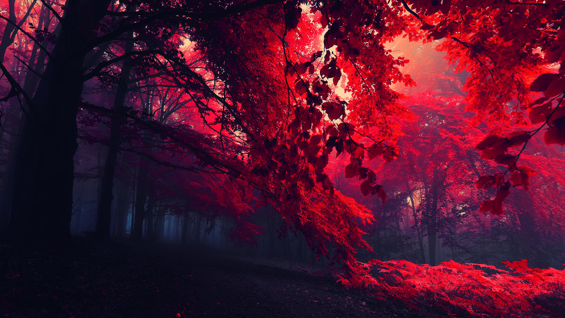 1920x1080 Red-leaves-dark-forest-fall-hd-wallpaper vvallpaper net.jpg