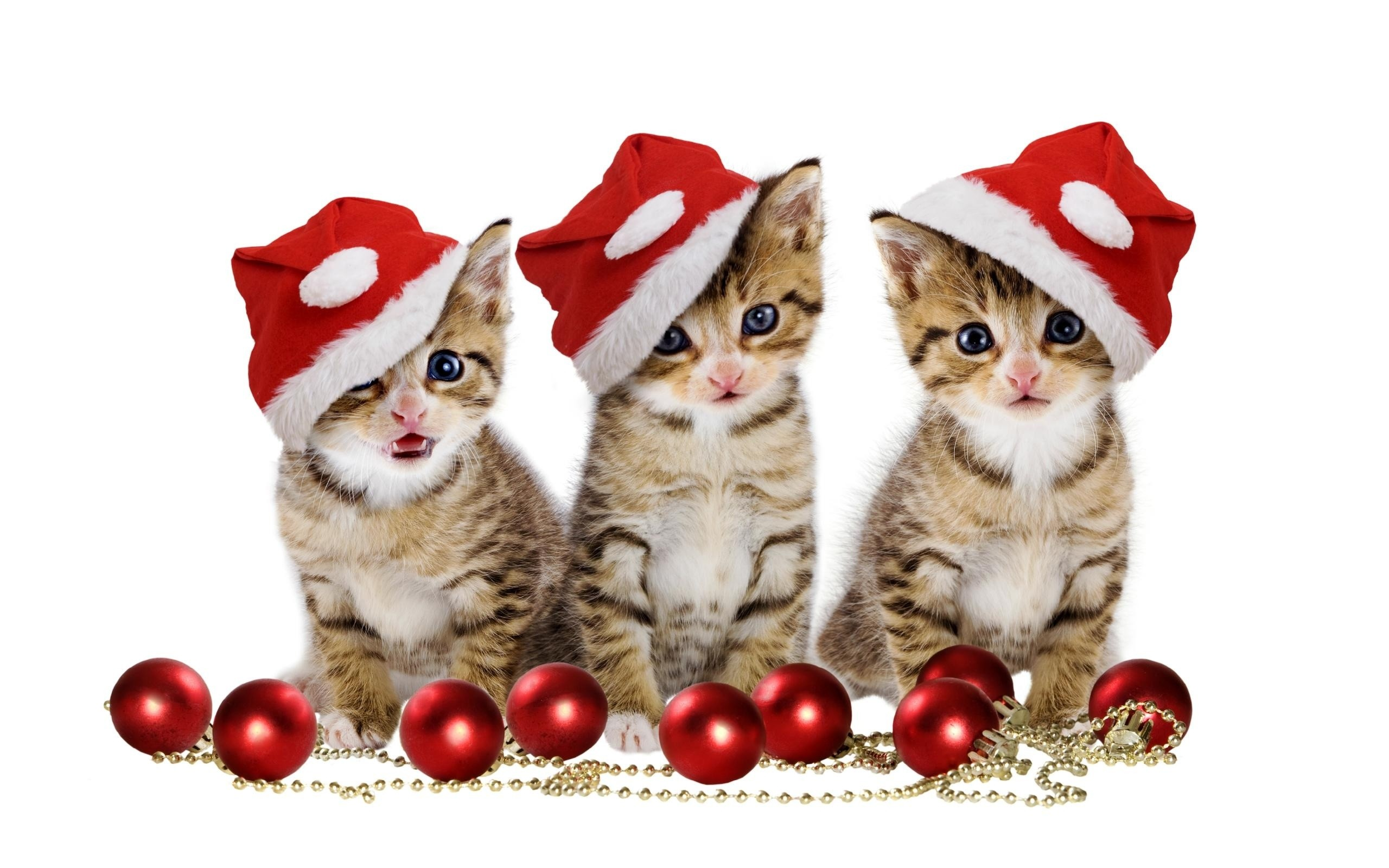 2560x1600 ... Christmas kittens HD Wallpaper