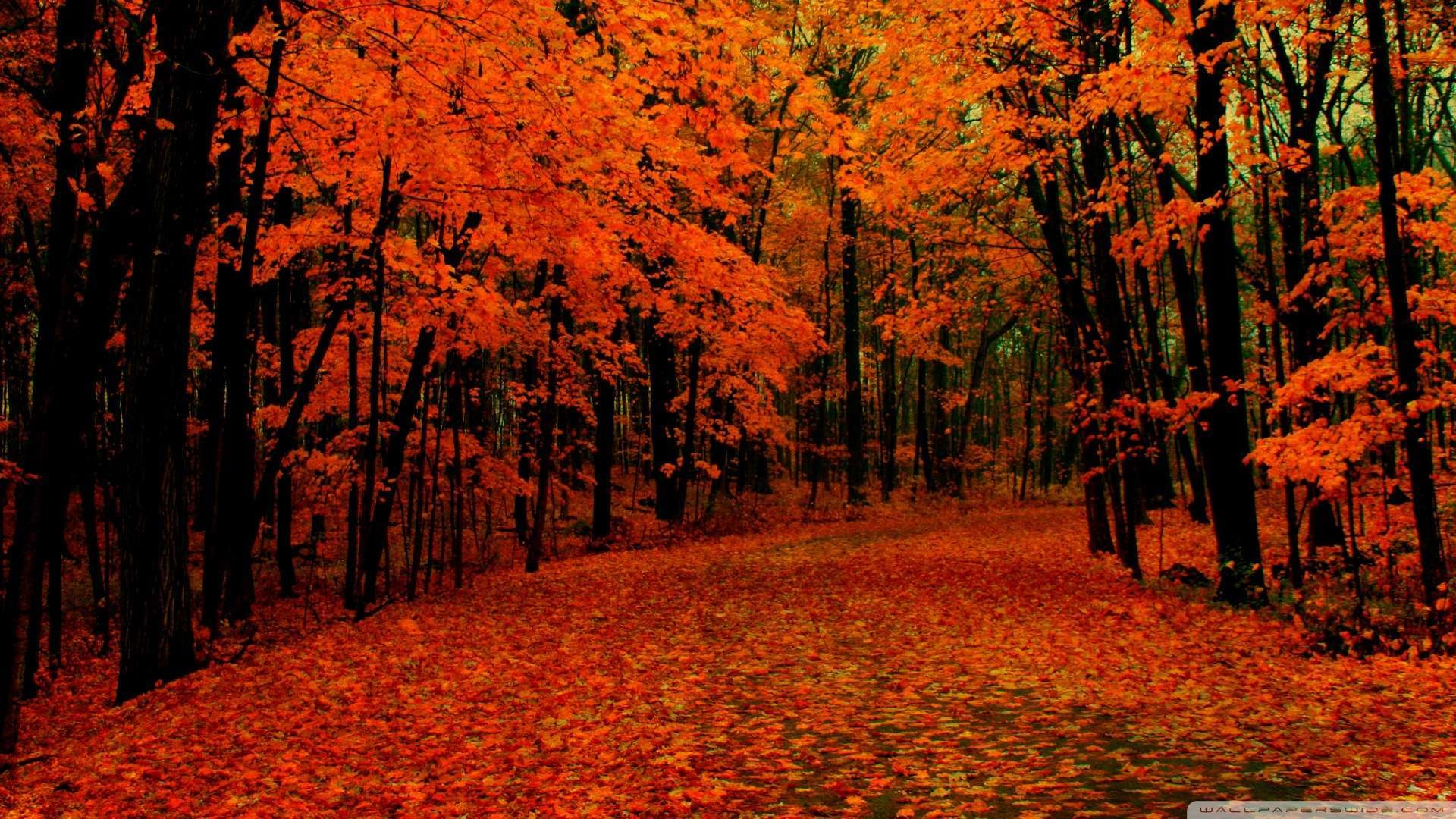 1920x1080 Wallpaper: Fall Path Wallpaper 1080p HD. Upload at February 2, 2014 by .