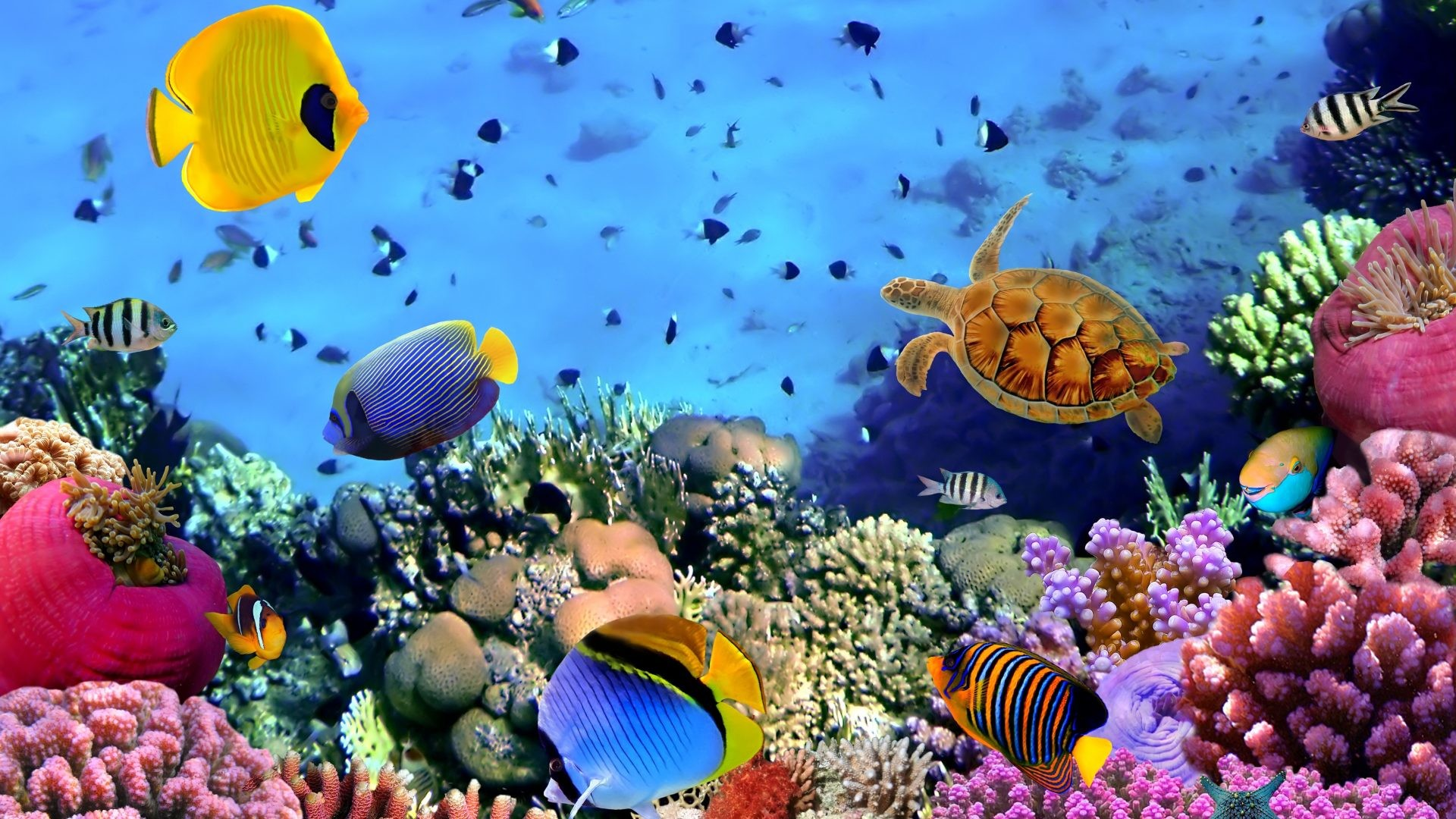 Coral Reef Wallpaper (61+ Images