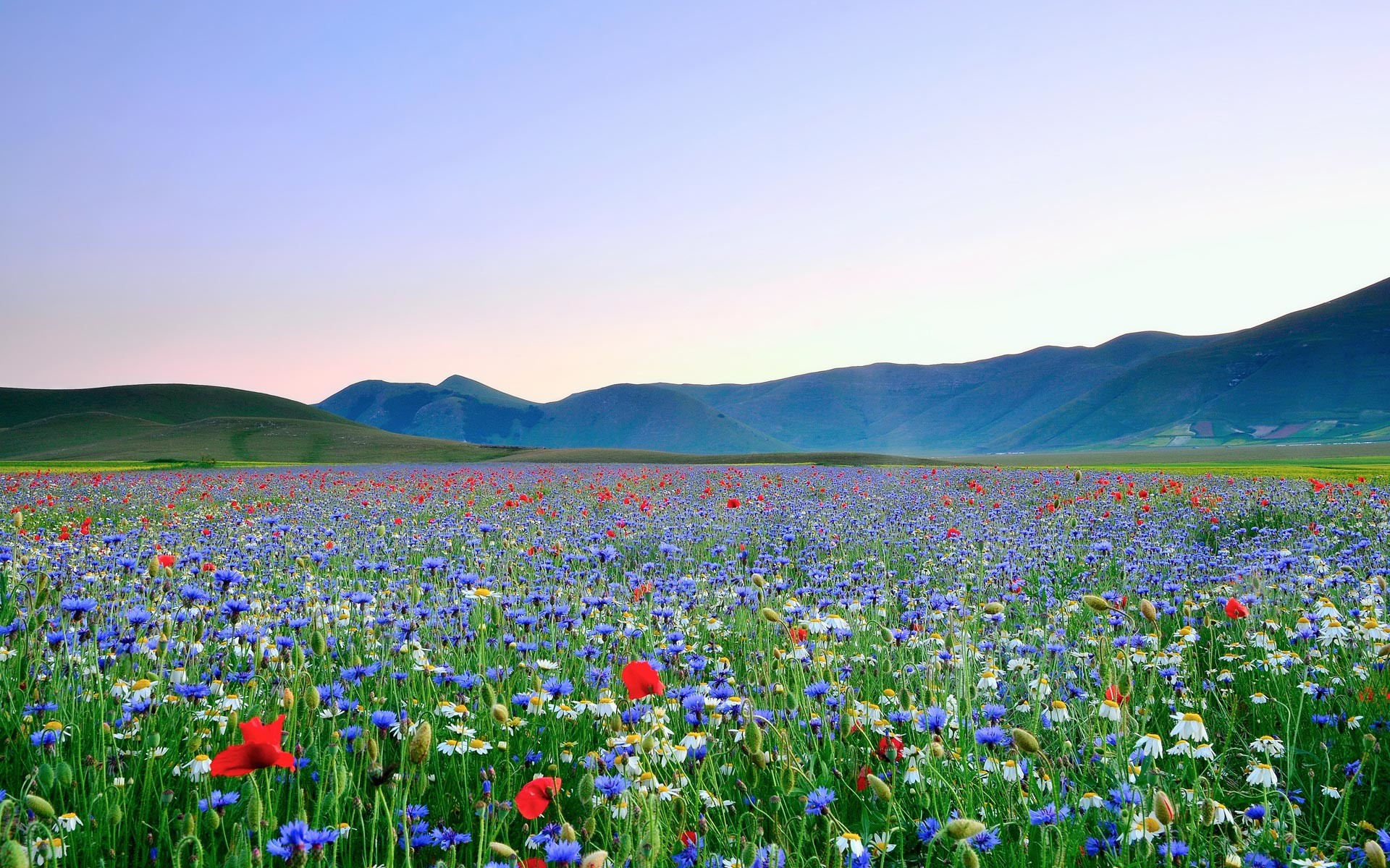 1920x1200 Summer Field of Flowers Wallpaper HD.