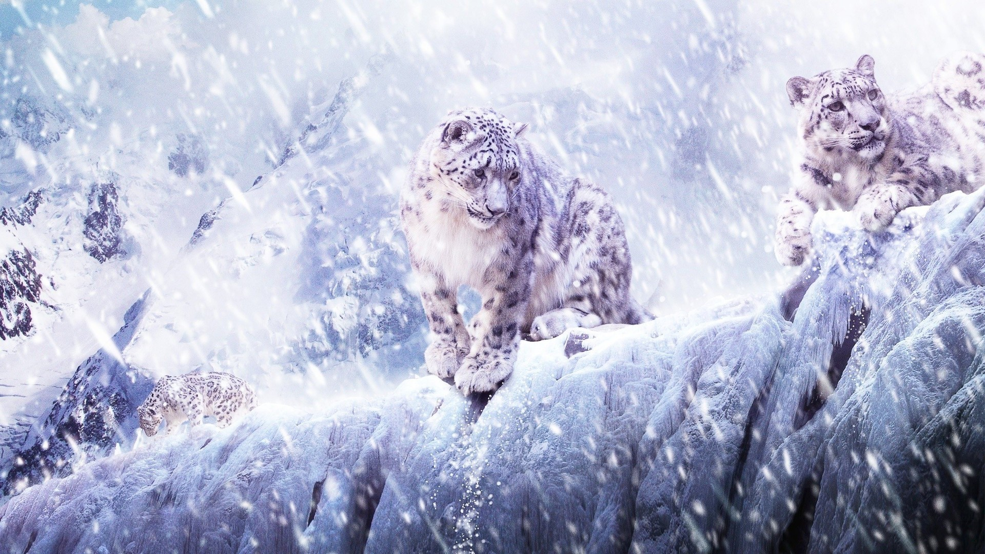 mac wallpaper snow leopard 64 images