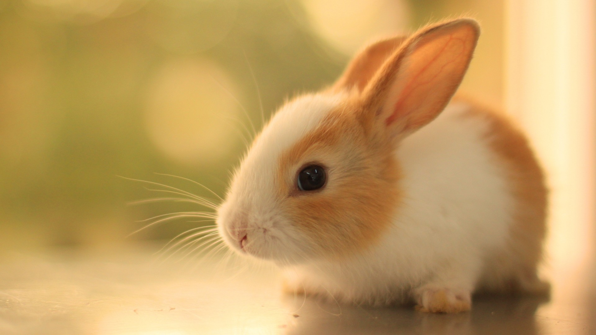 1920x1080 innocent cute rabbit hd desktop wallpaper widescreen backgrounds .