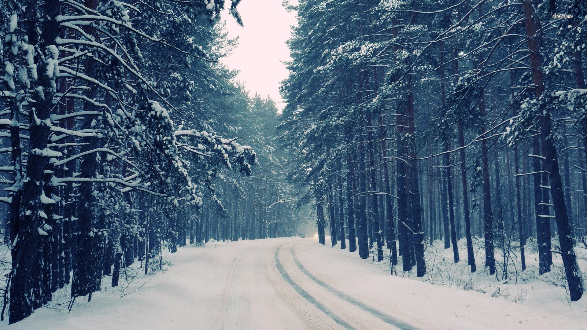 Winter forest wallpaper 62 images - Snowy wallpaper ...