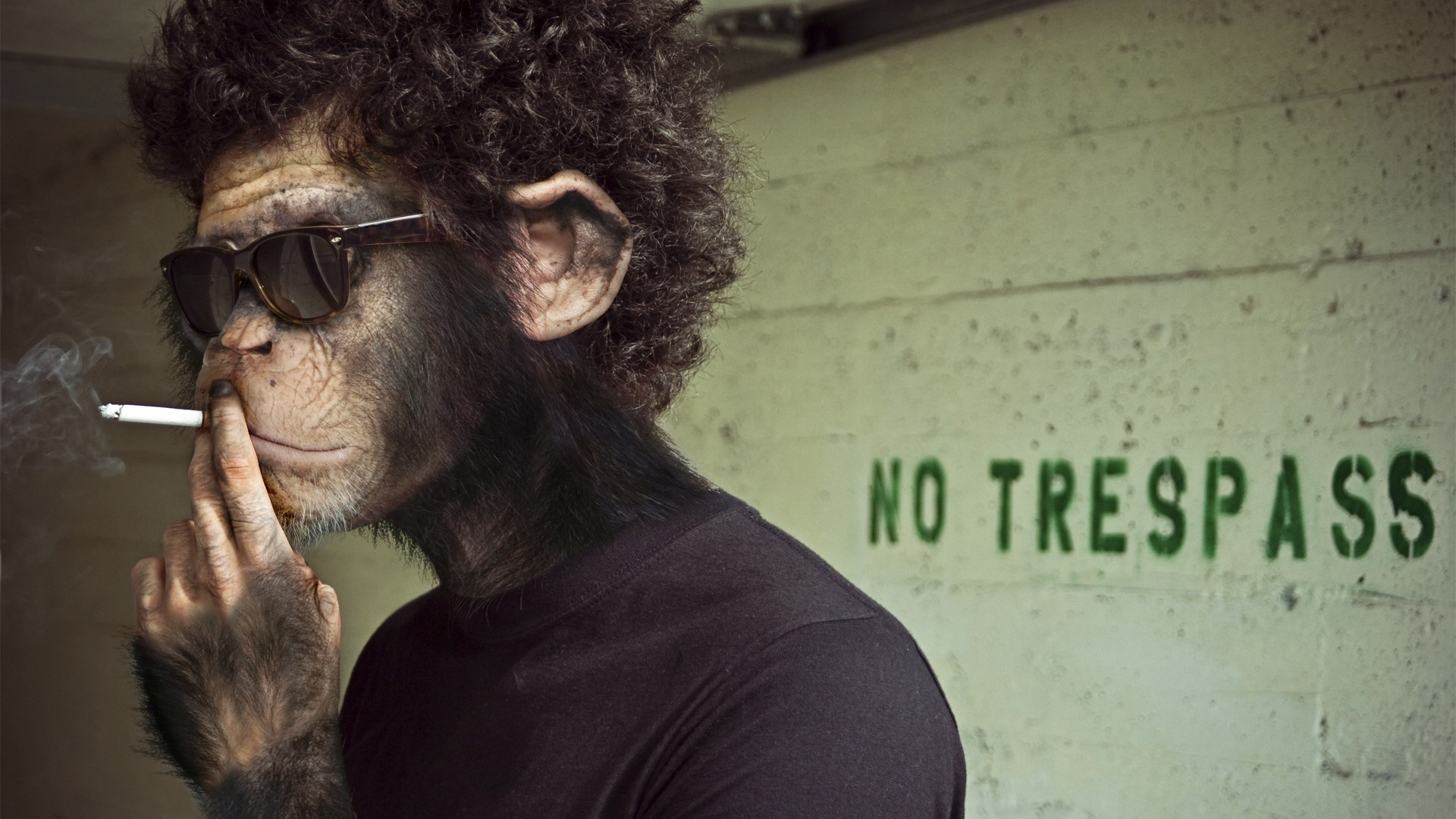1920x1080 Preview wallpaper monkey, man, cigarette, smoking