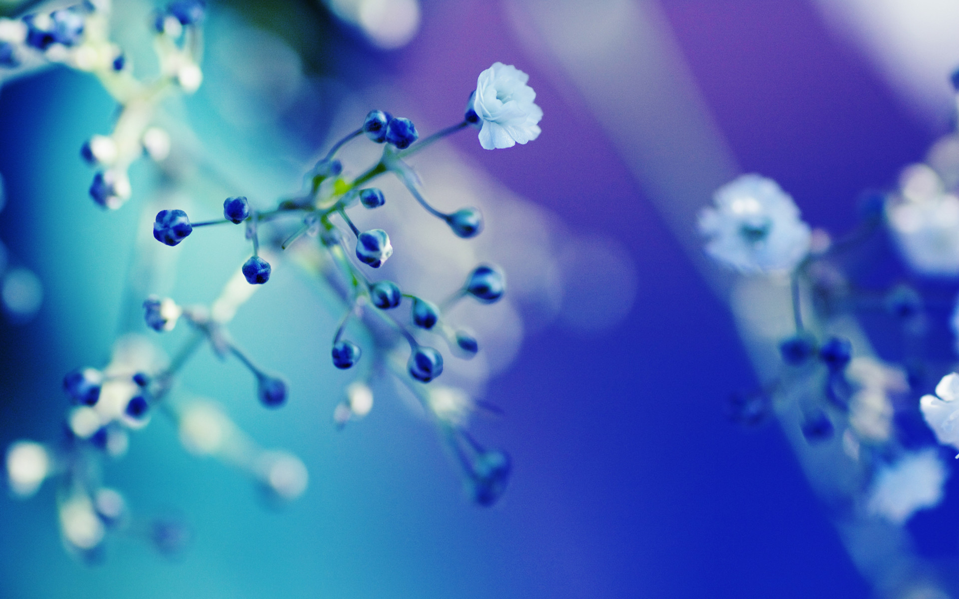 1920x1200 Flower HD Wallpaper | Background Image |  | ID:78376 - Wallpaper  Abyss