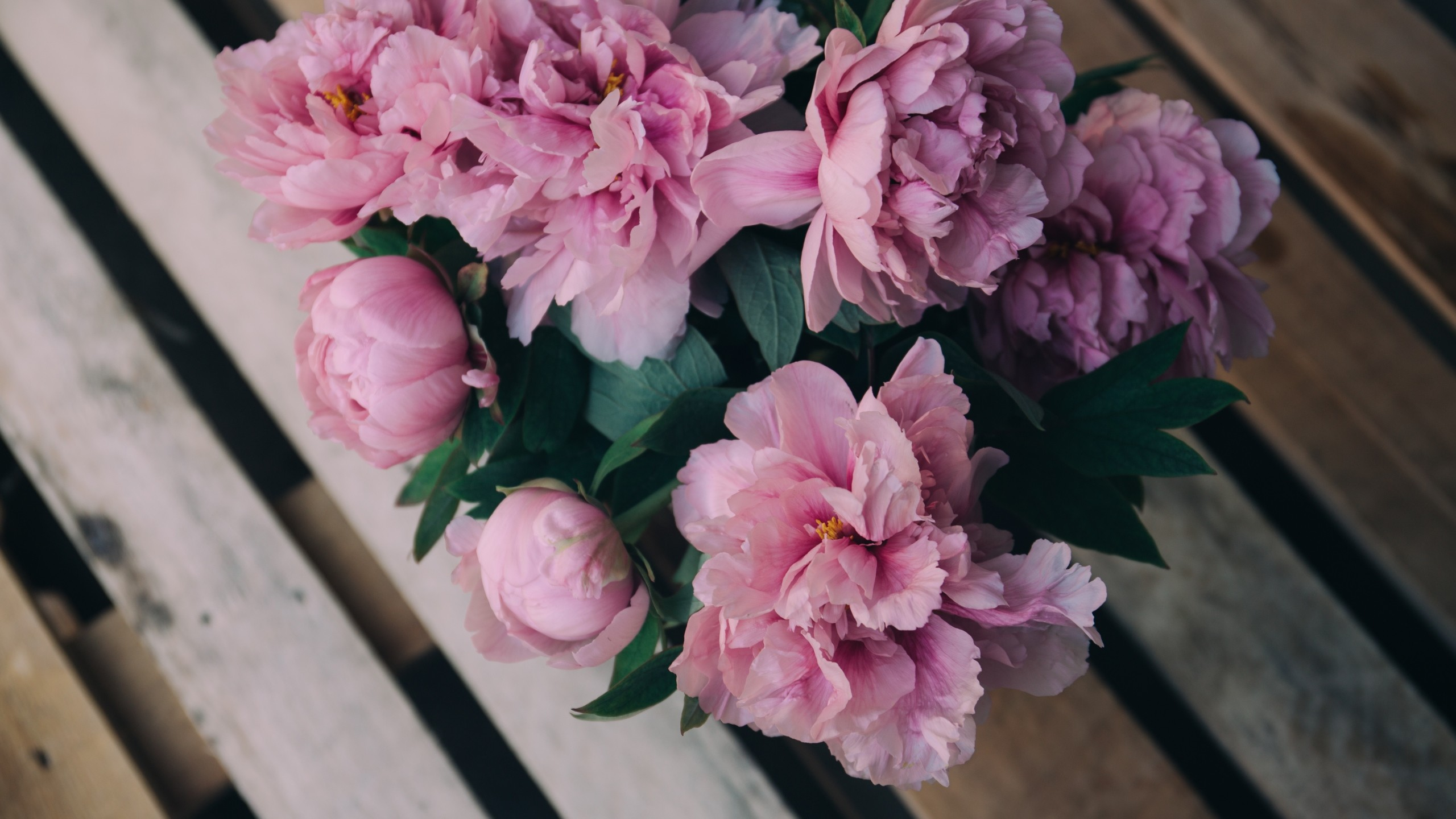 2560x1440  Wallpaper peonies, flowers, bouquet, pink