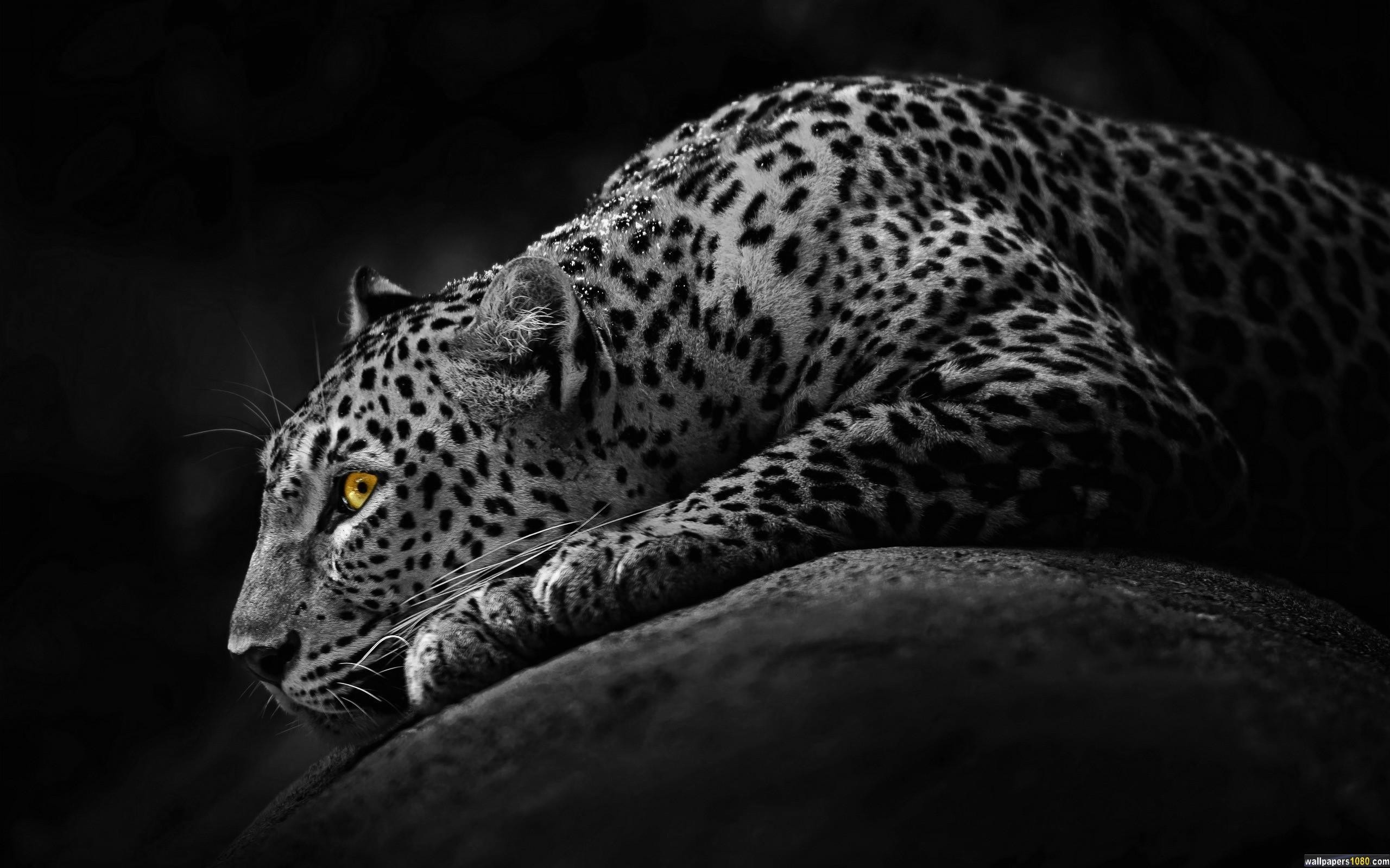 2560x1600 Download Black Dark Jaguar Windows 10 Wallpaper | 1080p Wallpapers, Hd ..