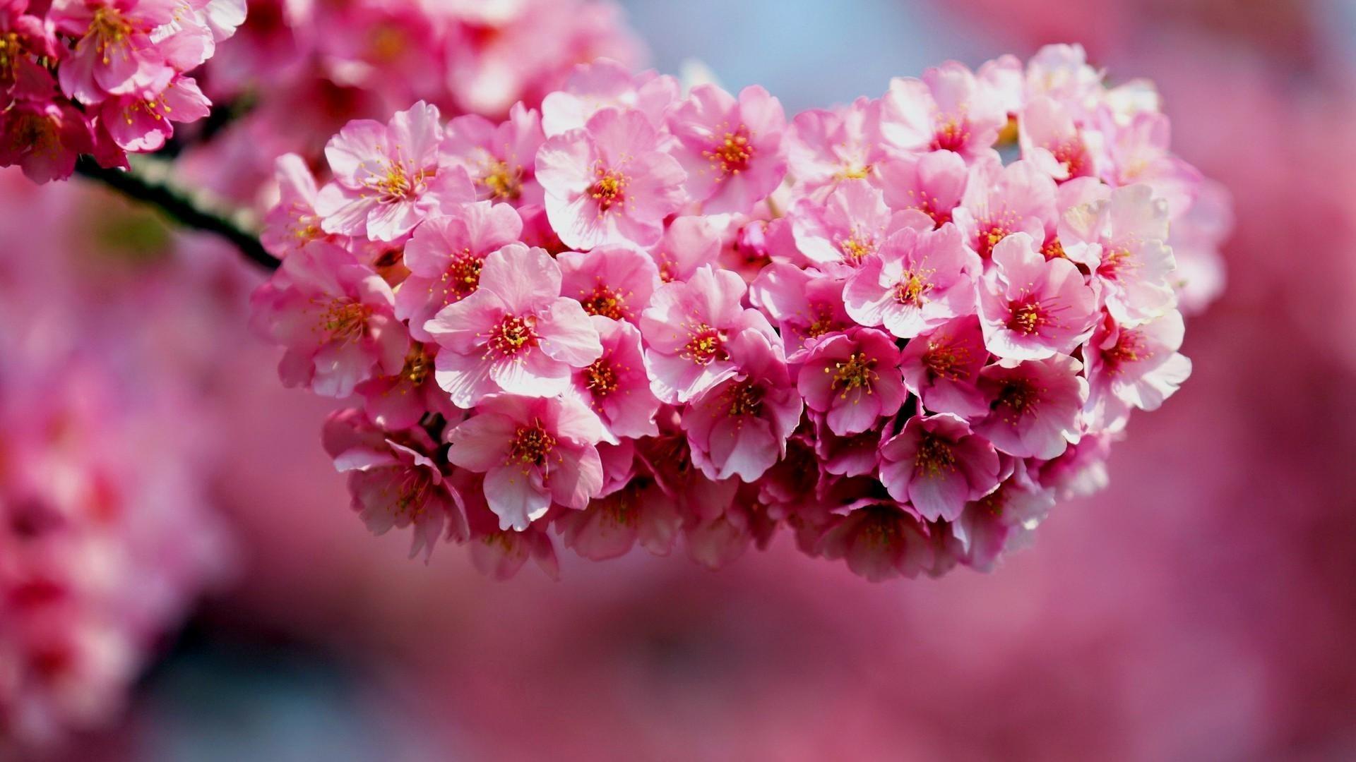 Flowers For Desktop Background 64 Images