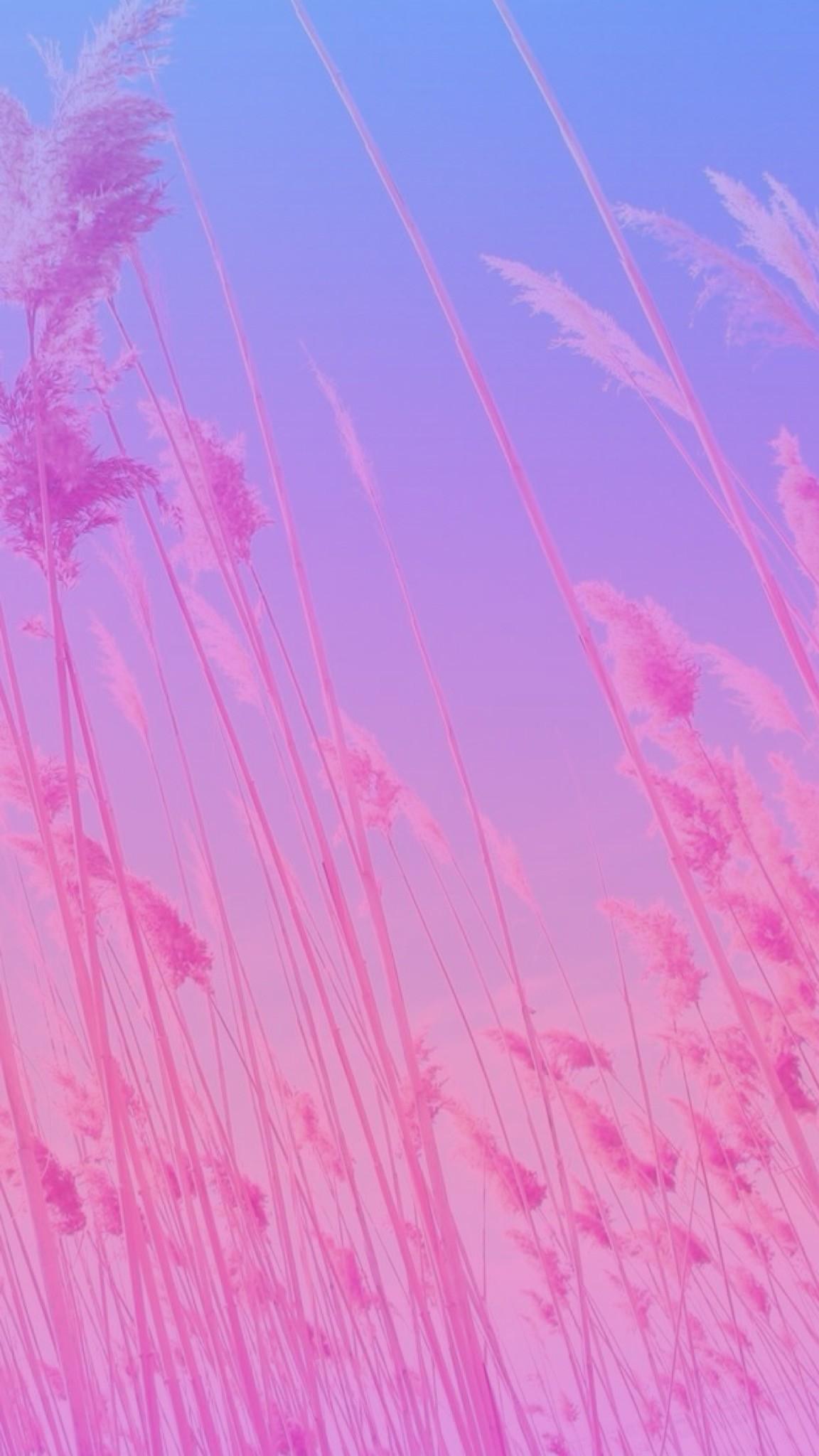 Pink Phone Wallpaper 64 images