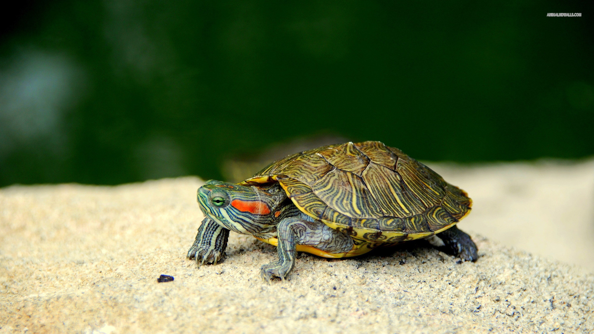 Cute Turtle Wallpaper (59+ images)