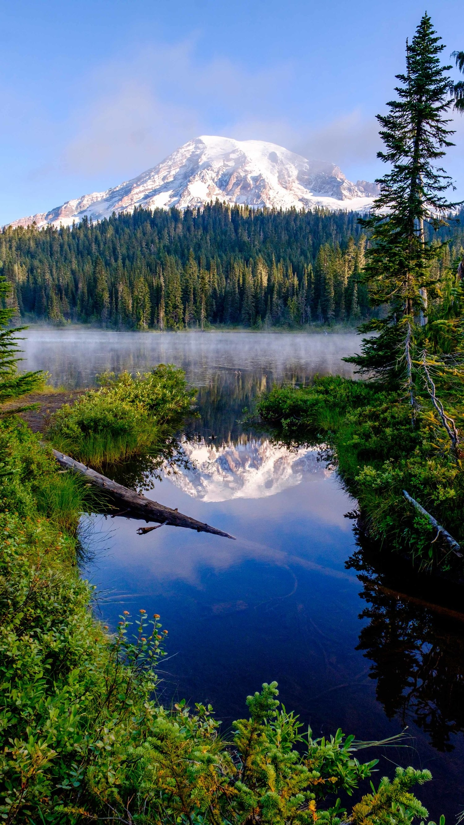 1500x2667 Mount Rainier National Park Mobile Phone Wallpaper — The Greatest American  Road Trip